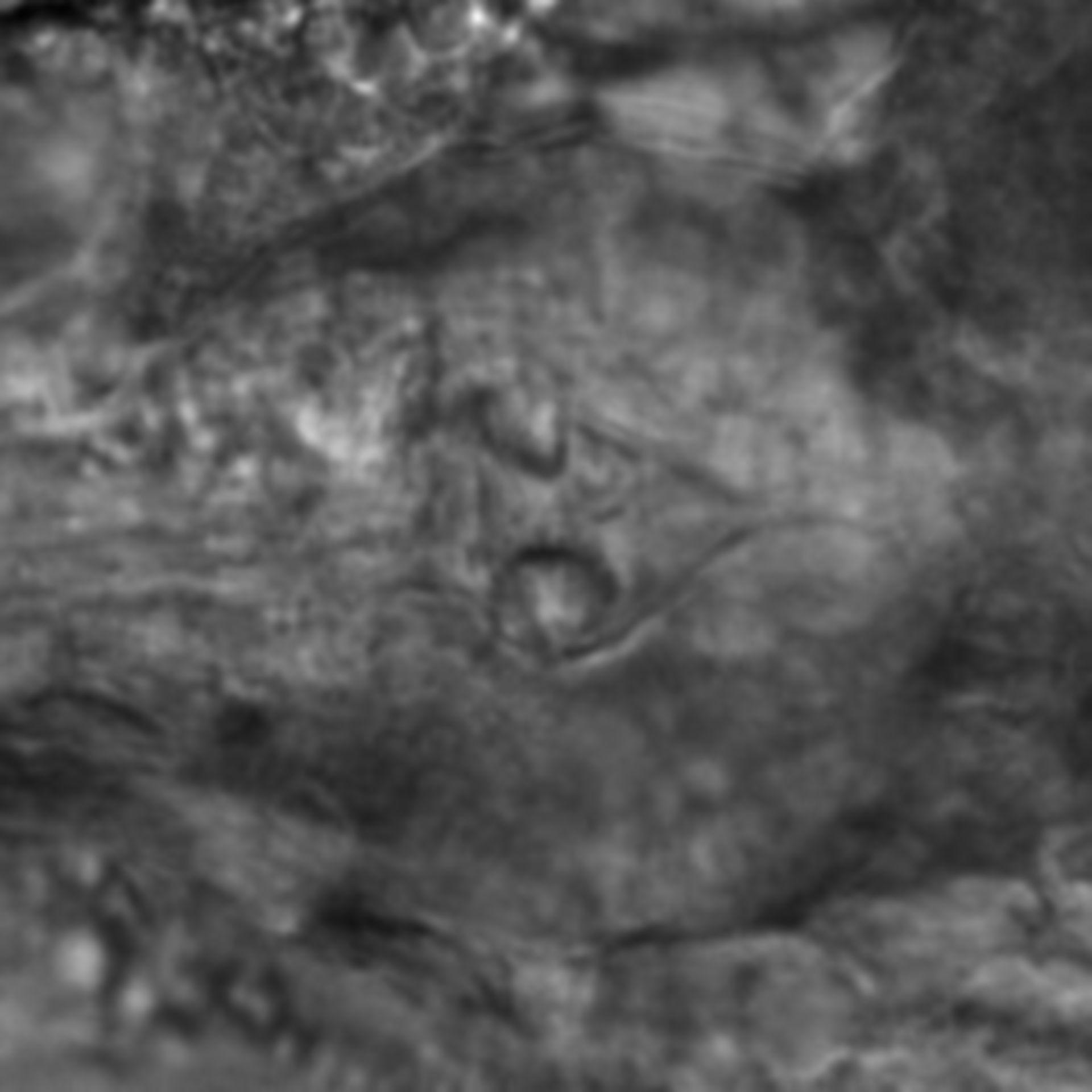 Caenorhabditis elegans - CIL:2806