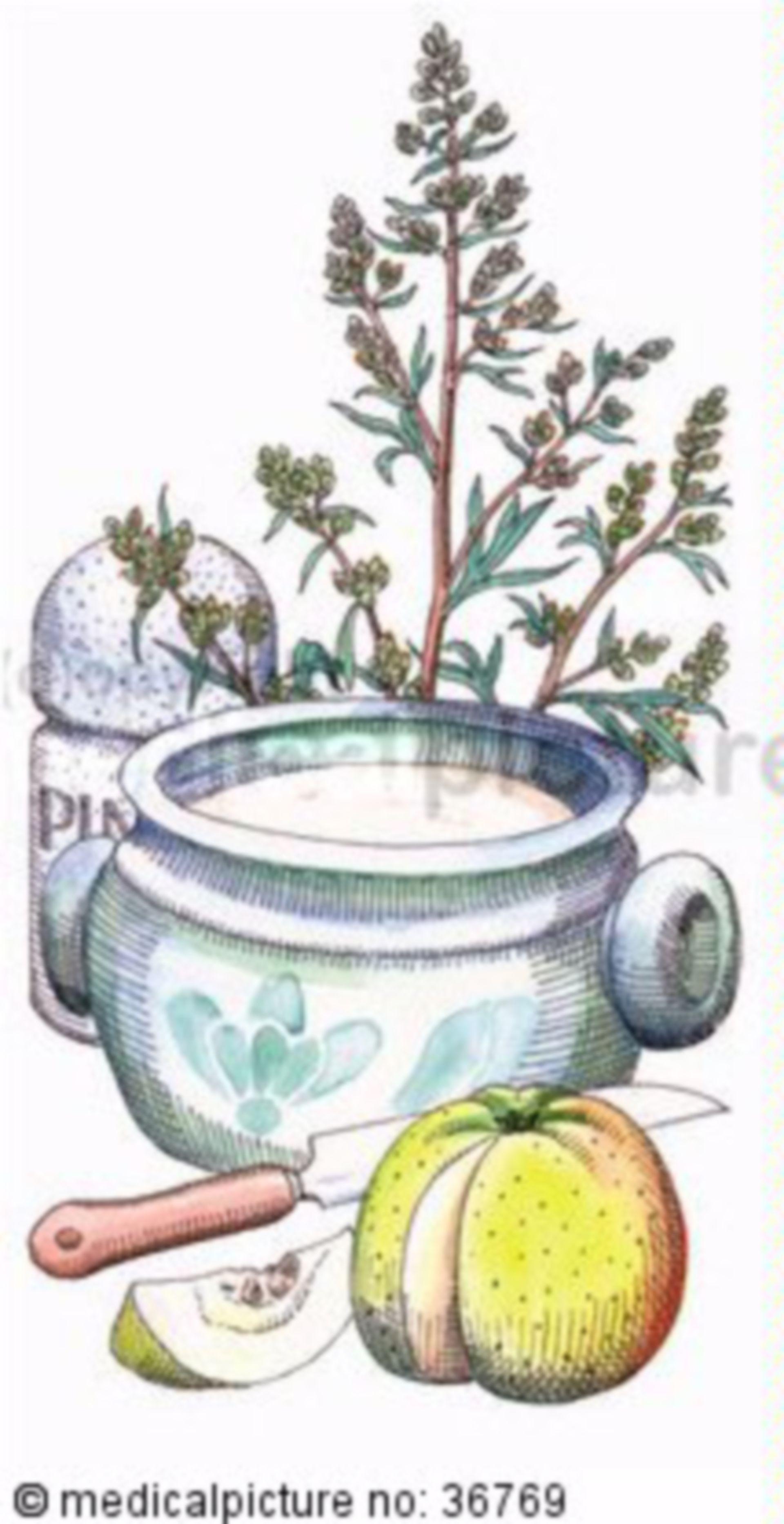 Kräuter, Artemisia vulgaris, Beifuss