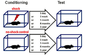 Schematische Darstellung des Tests