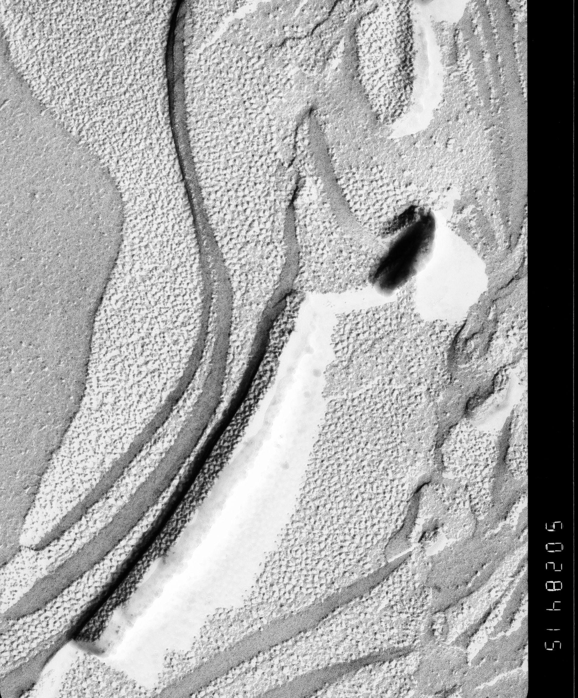 Prochloron (Thylakoid) - CIL:16227