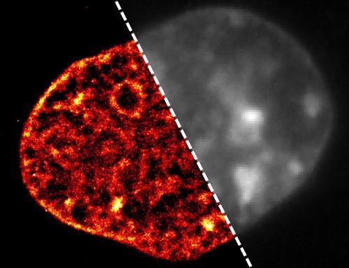 Neue Mikroskopietechnik bietet bisher unerreichte Detailtiefe in der Beobachtung einer Zelle. Das Bild der DNA einer Zelle, aufgenommen mit der am IMB entwickelten neuen superauflösenden Mikroskopietechnik, zeigt die DNA in scharfen Details (links). Im Gegensatz dazu ist das herkömmliche Mikroskopiebild verschwommen und macht eine Darstellung der auffälligen Veränderungen in der DNA, die von den Forschern am IMB entdeckt wurden, unmöglich (rechts). © A. Szczurek & I. Kirmes