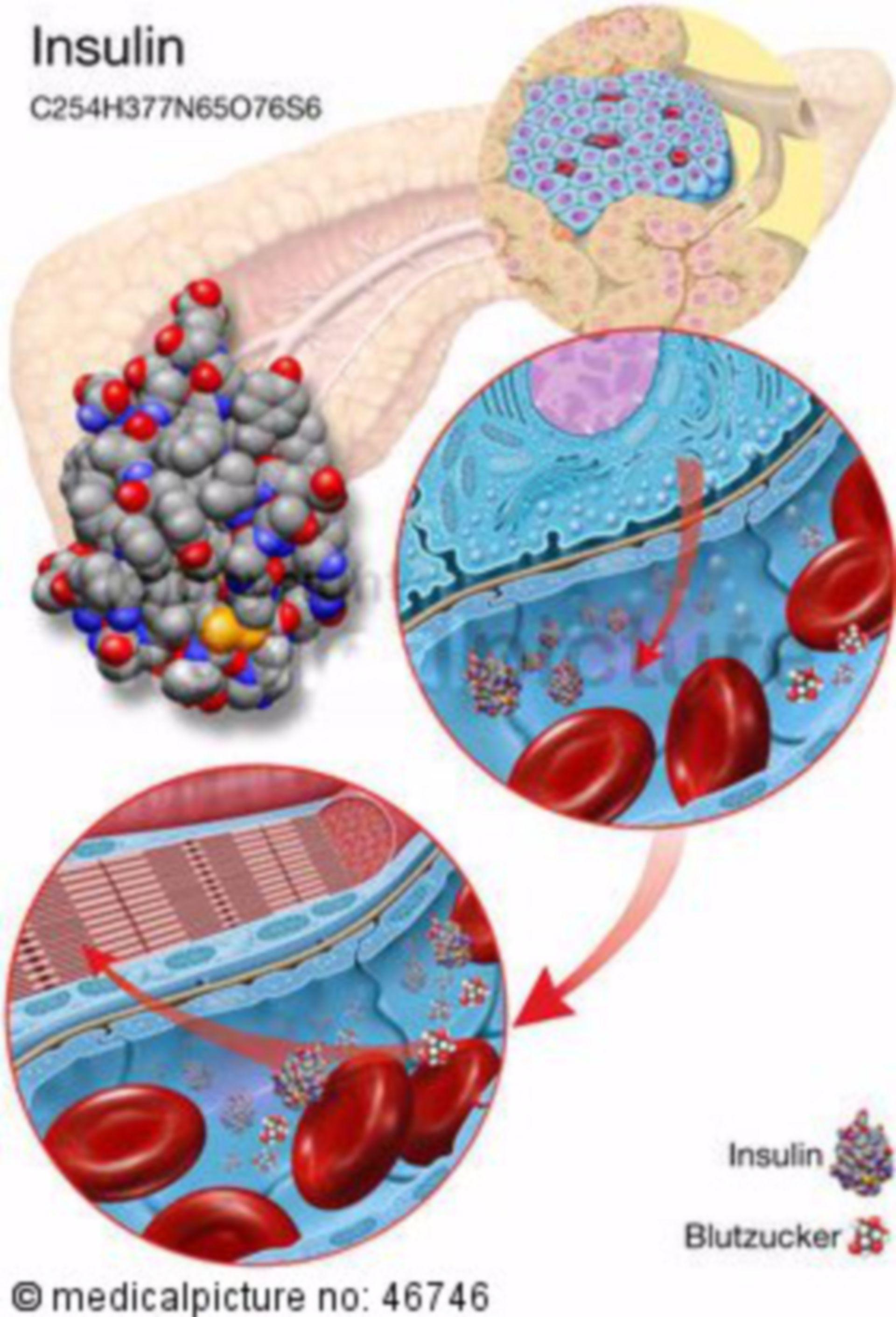 L'insulina, insulino-formazione, il trasporto di insulina