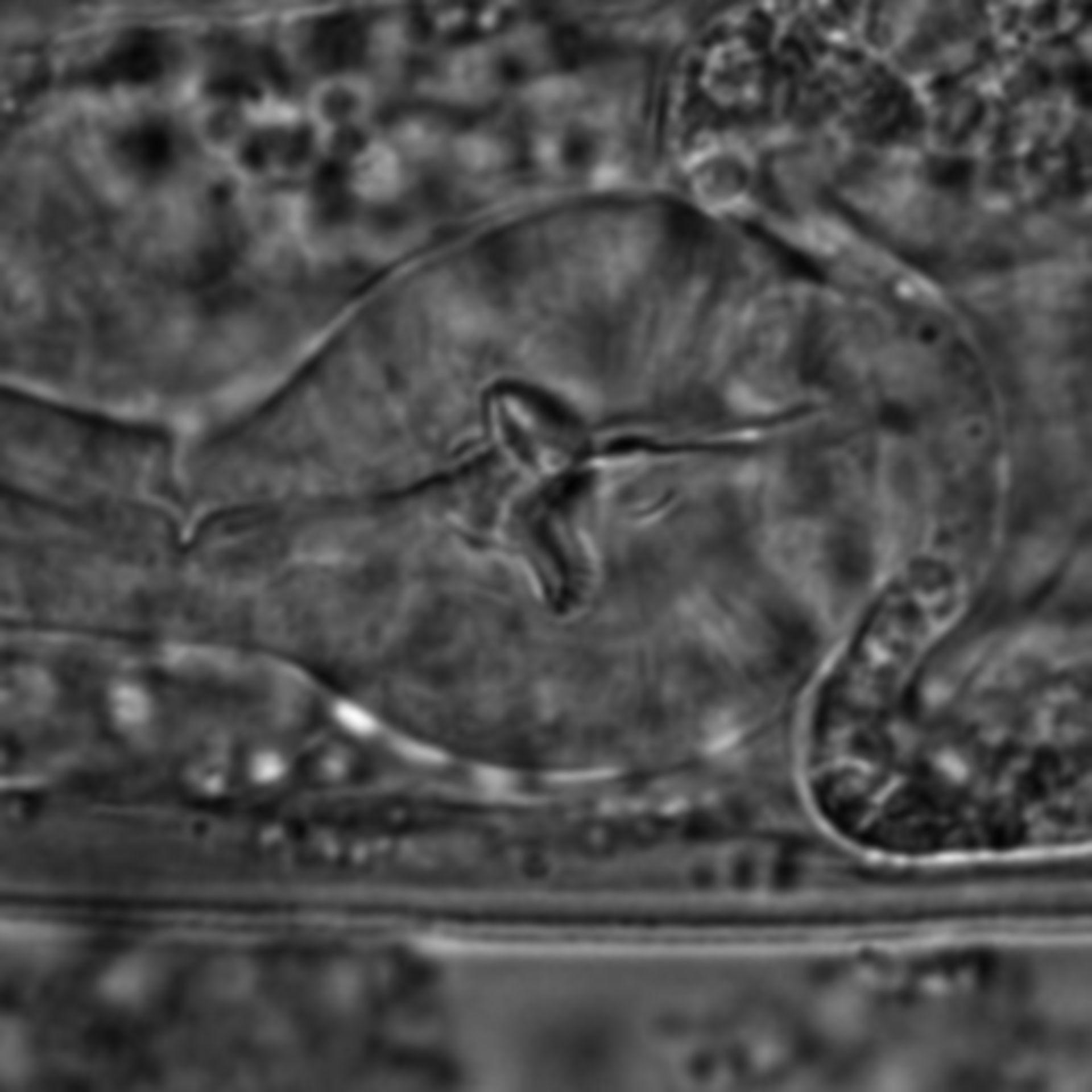 Caenorhabditis elegans - CIL:1668