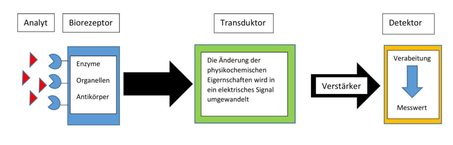Aufbau eines Biosensors