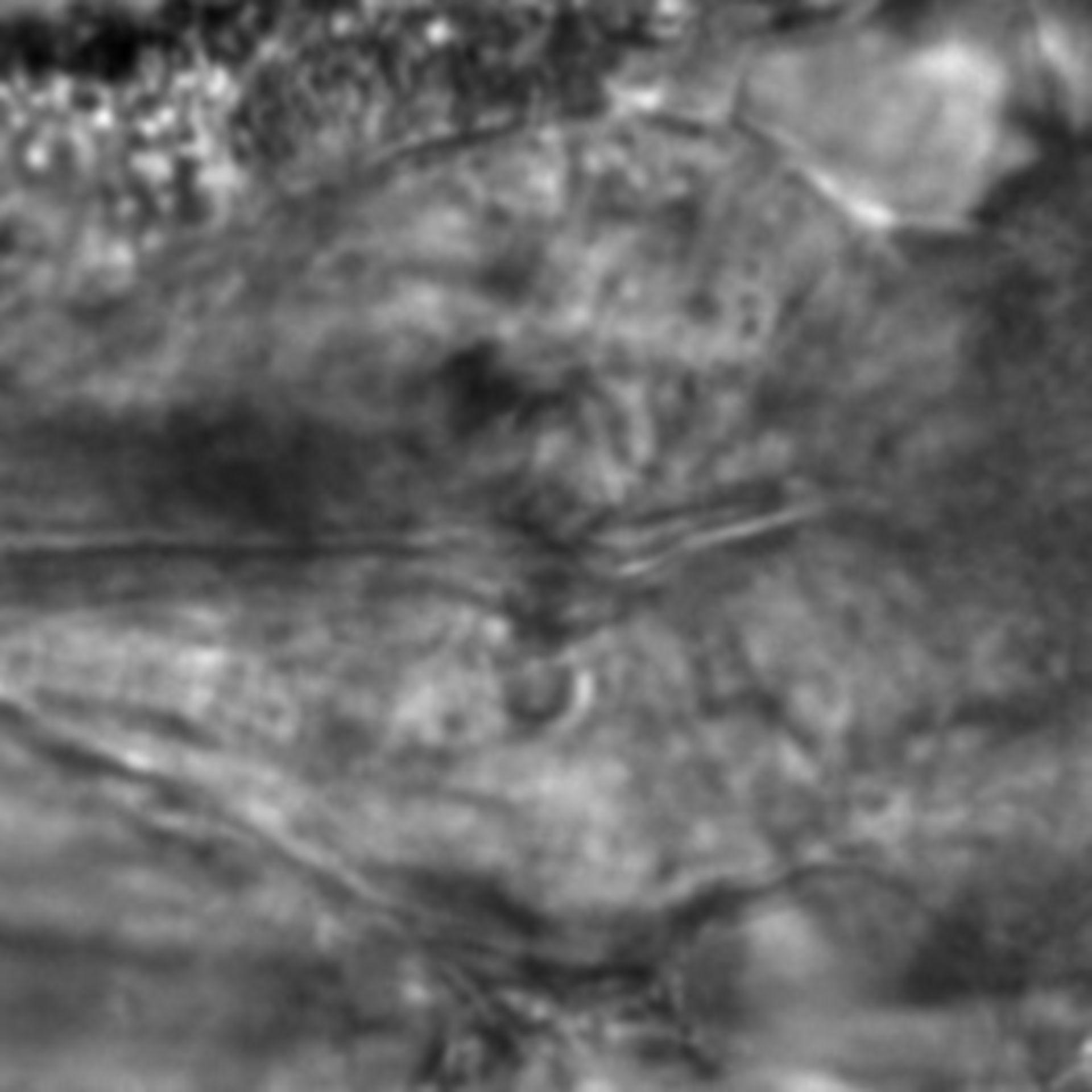 Caenorhabditis elegans - CIL:1919