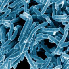 Geschlossene tuberkulose