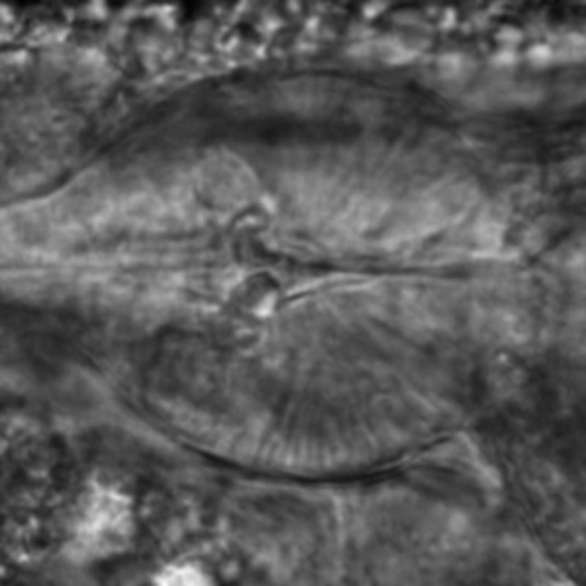 Caenorhabditis elegans - CIL:2182