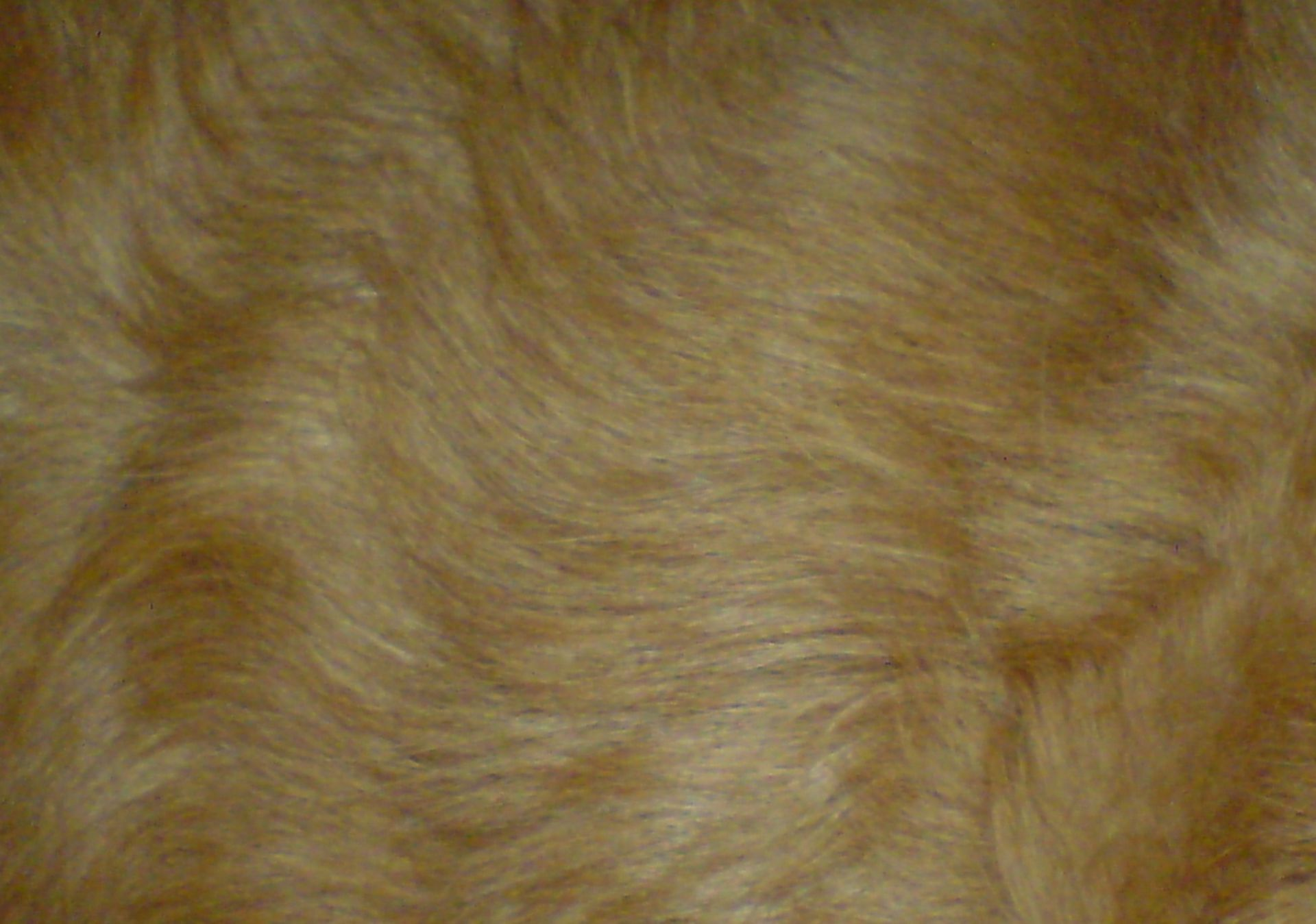 Veterinary Medicine: Fur Coat of a Dog