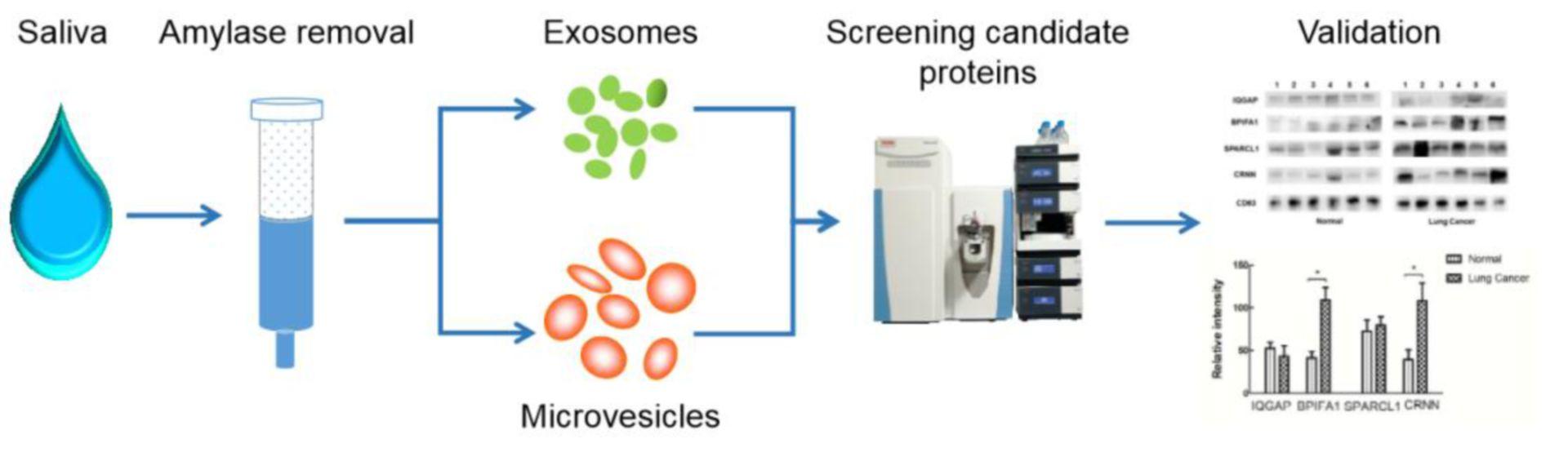 Exosome proteomics analysis