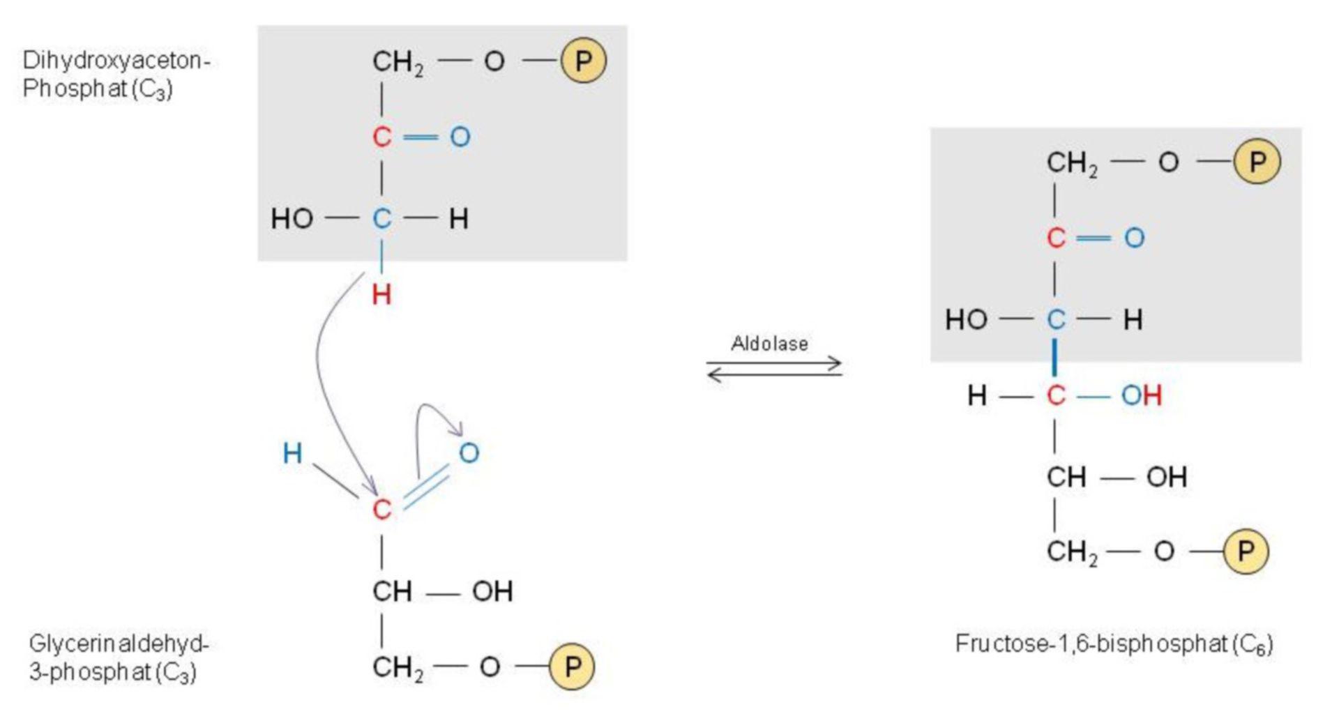 Ejemplo de la bioquímica