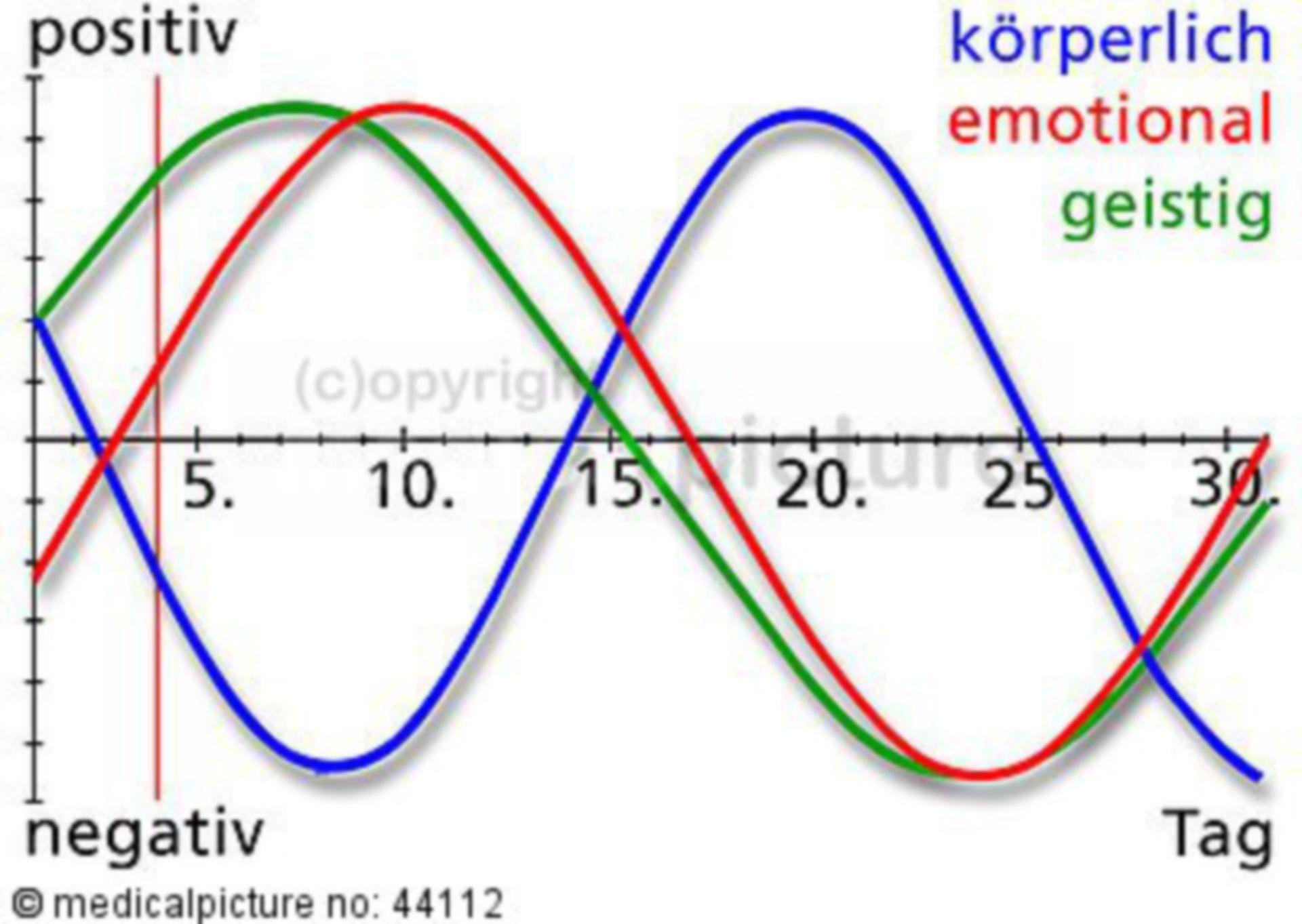 Biorhythm, inner clock