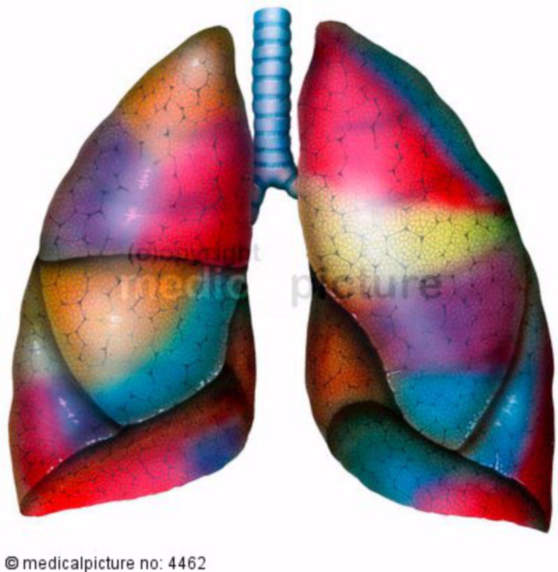 Segmented lung