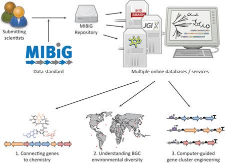 Schema des Ablaufs. Die Forscher geben ihre Daten über ein Online-Formular ein. Von dort geht es automatisch weiter an mehrere Datenbanken, die miteinander vernetzt sind. © MIBiG