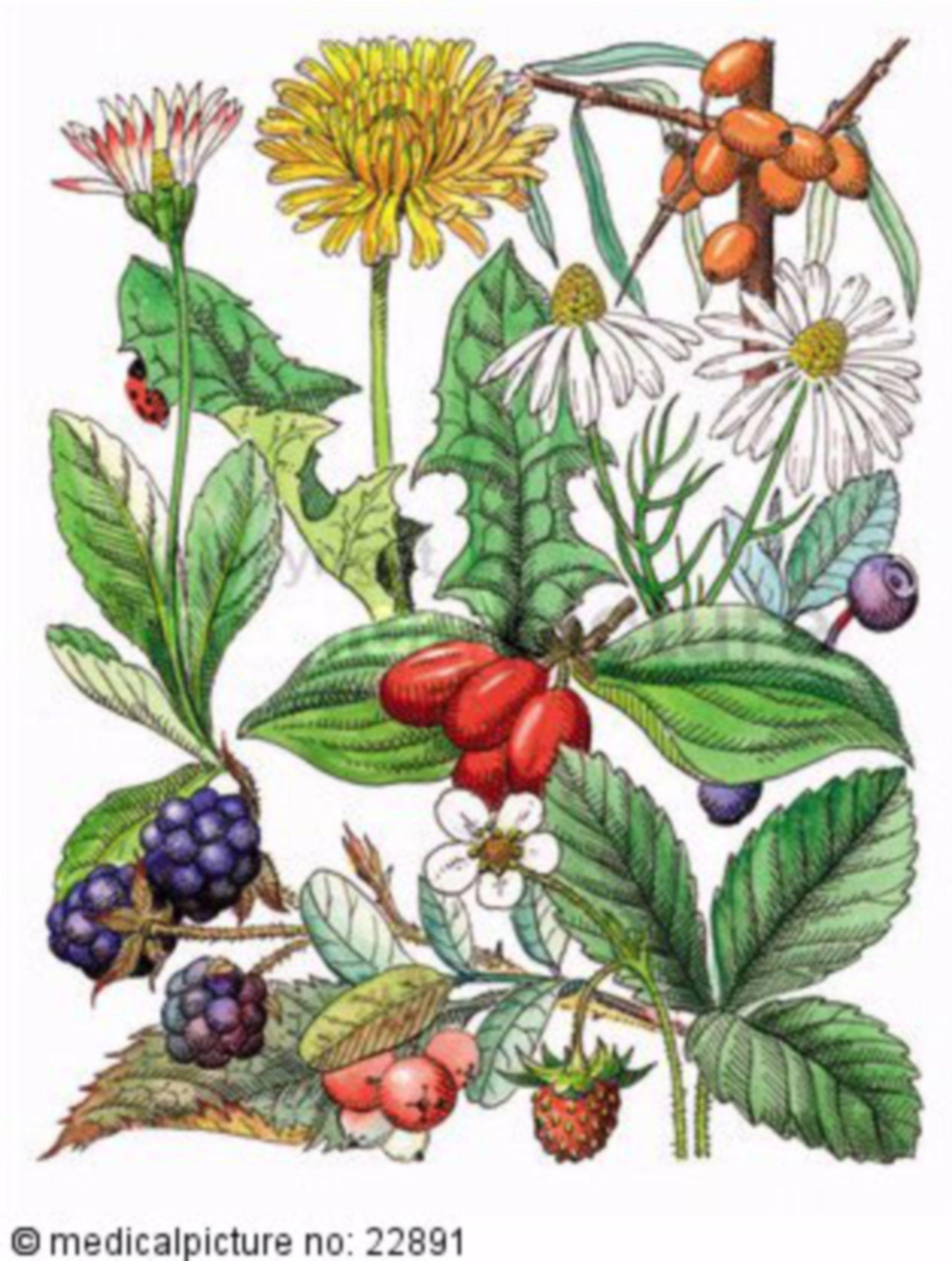 Verschieden Beeren und Kräuter