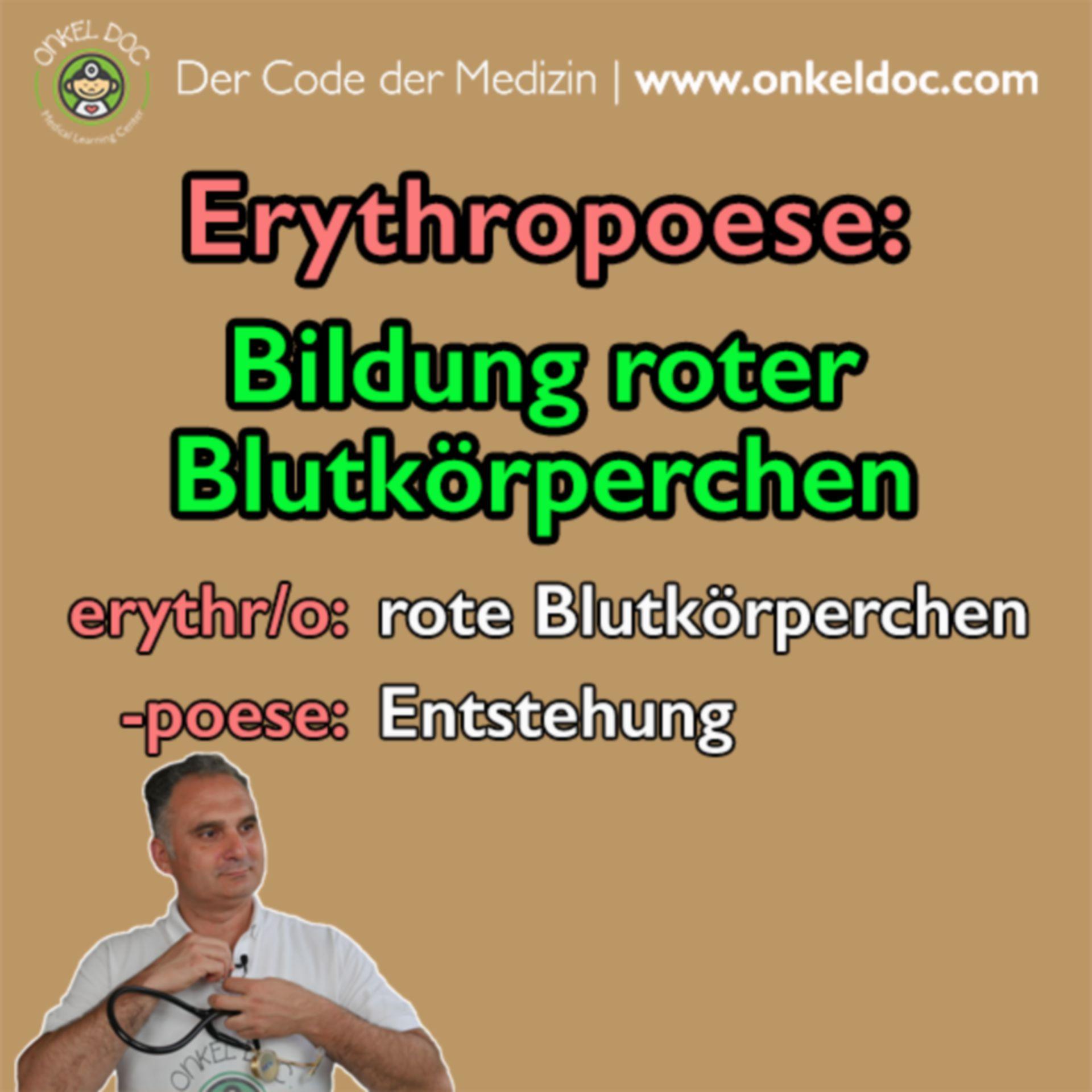 Der Code der Erythropoese