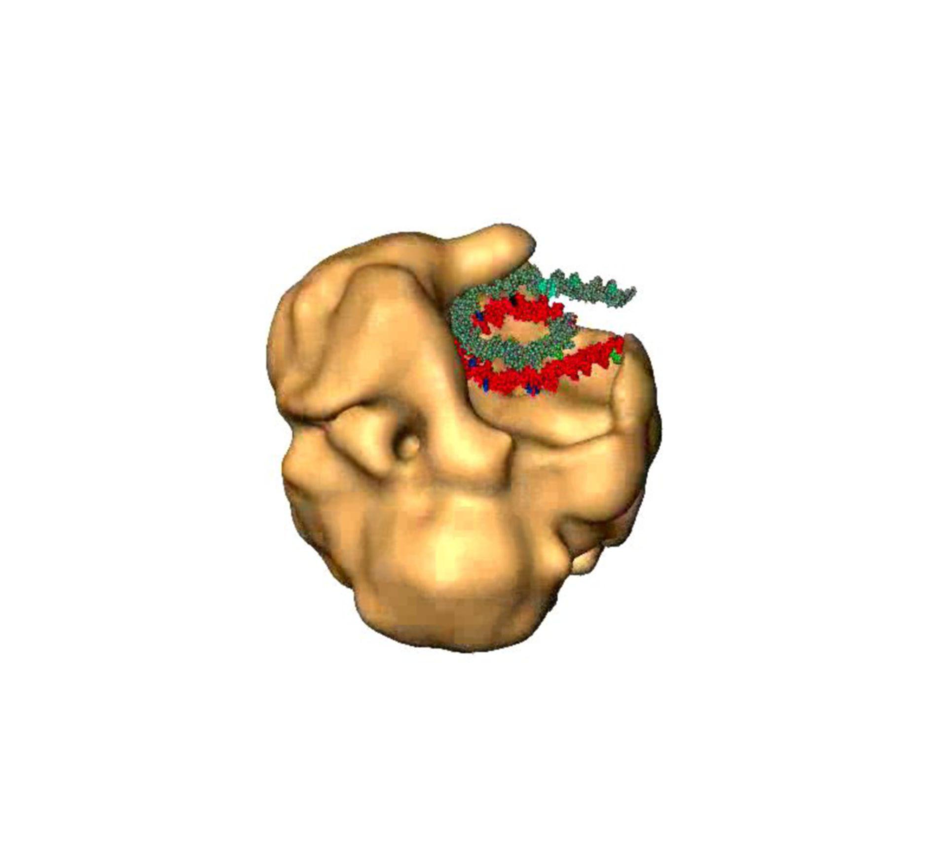 Saccharomyces cerevisiae (SWI/SNF complex) - CIL:7807