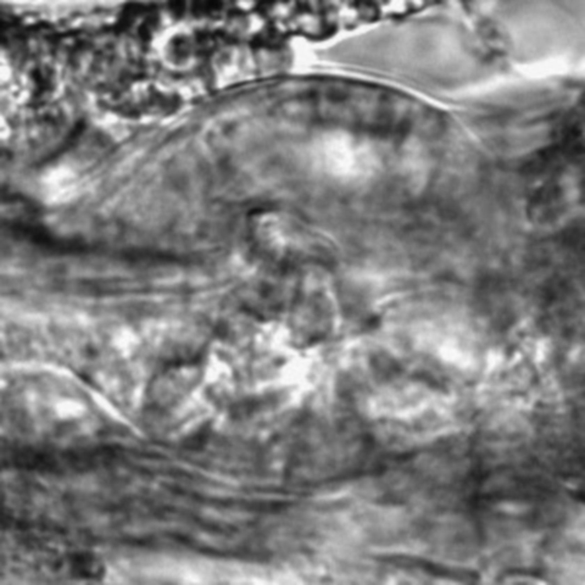 Caenorhabditis elegans - CIL:2176