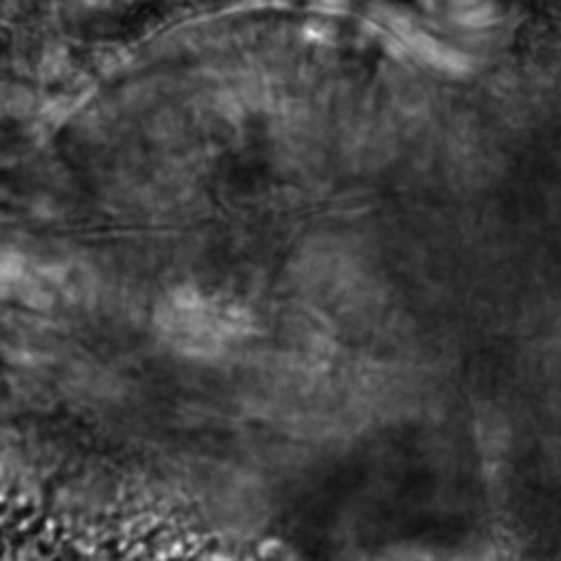 Caenorhabditis elegans - CIL:2130