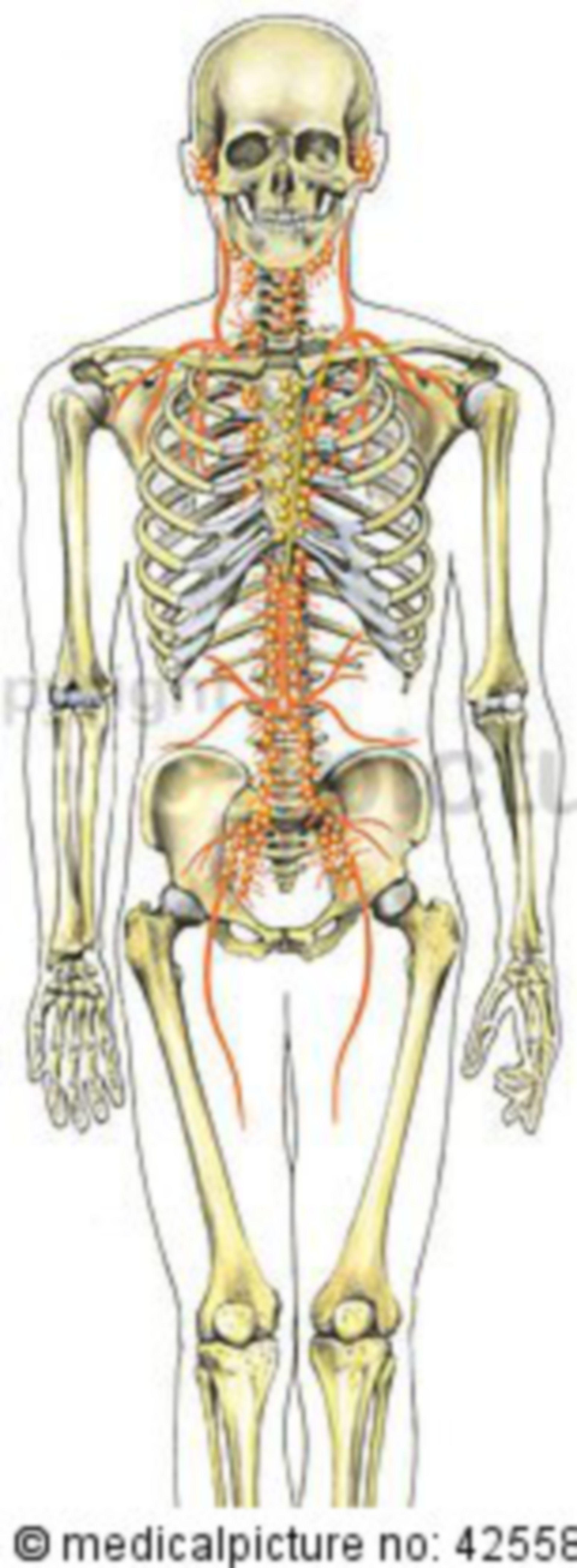 Vasi linfatici del corpo