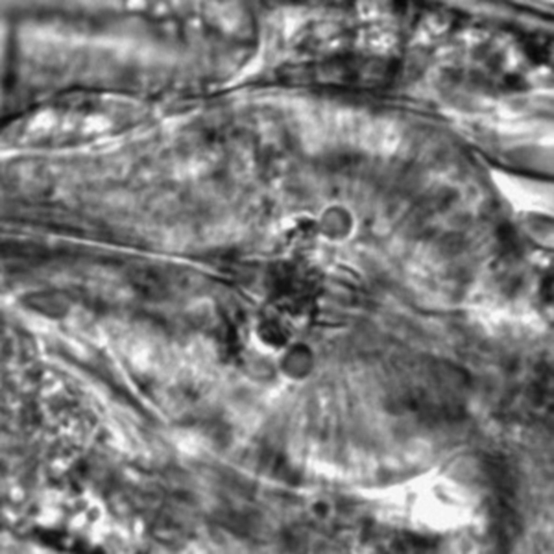 Caenorhabditis elegans - CIL:2164