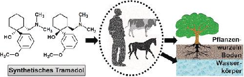 Synthetisches Tramadol gelangt bei nicht bestimmungsmäßiger Anwendung des Medikaments in Pflanzen und Umwelt. © Wiley-VCH