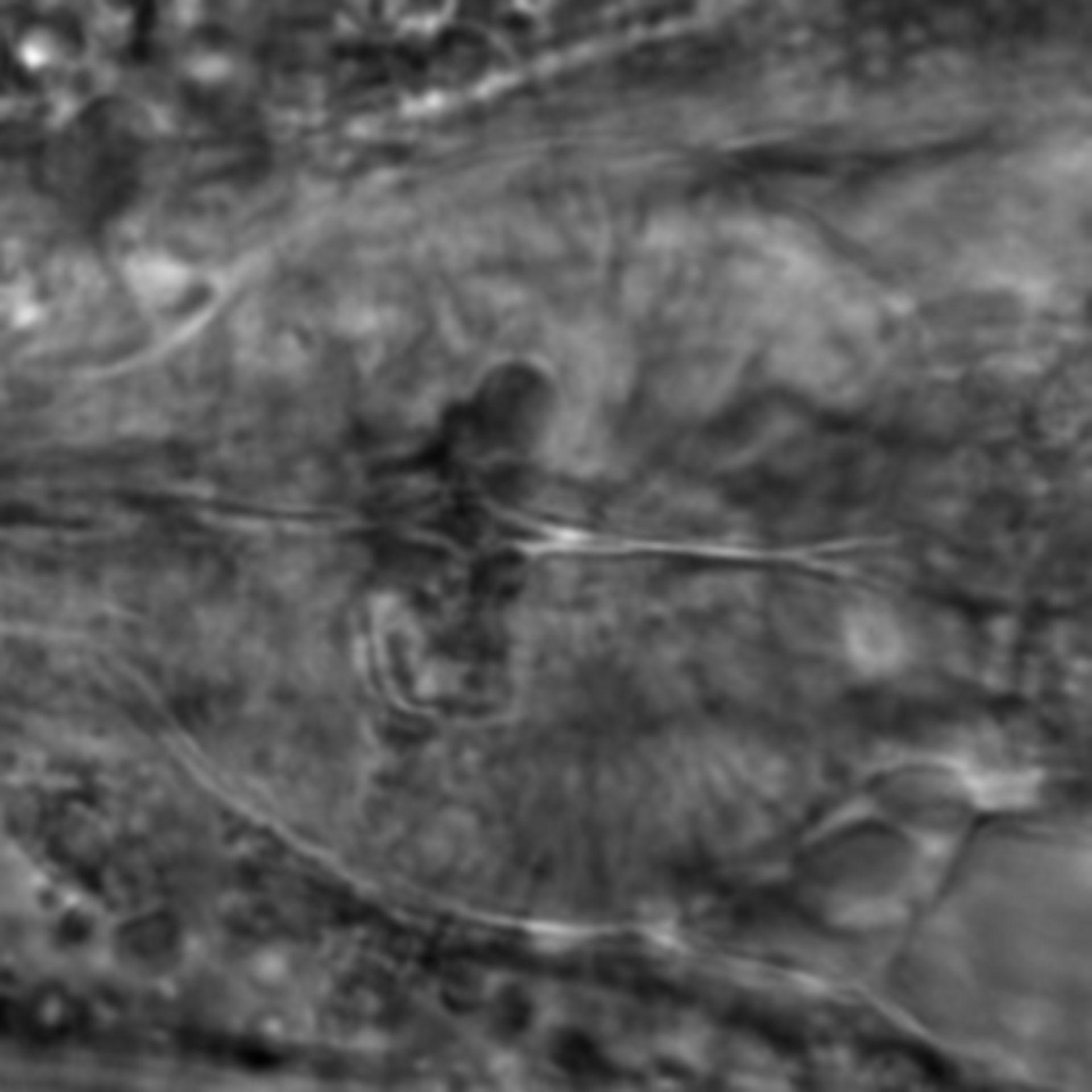Caenorhabditis elegans - CIL:2212