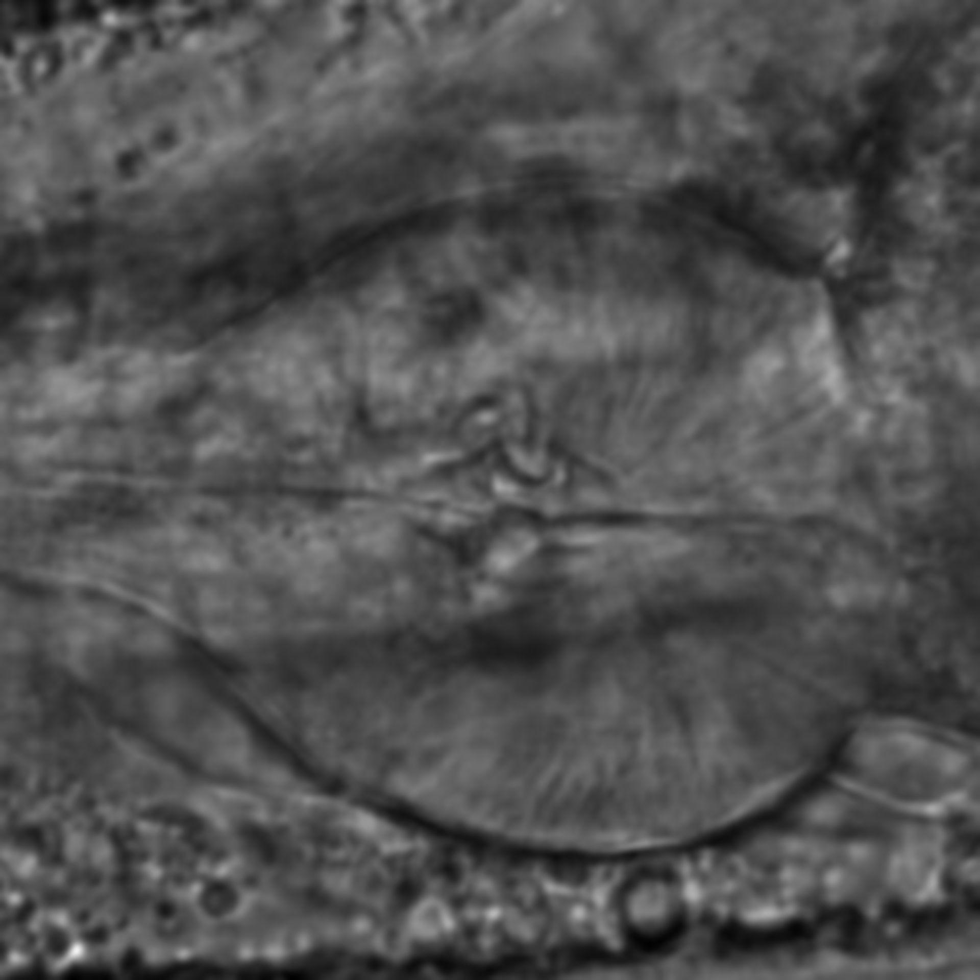 Caenorhabditis elegans - CIL:2194