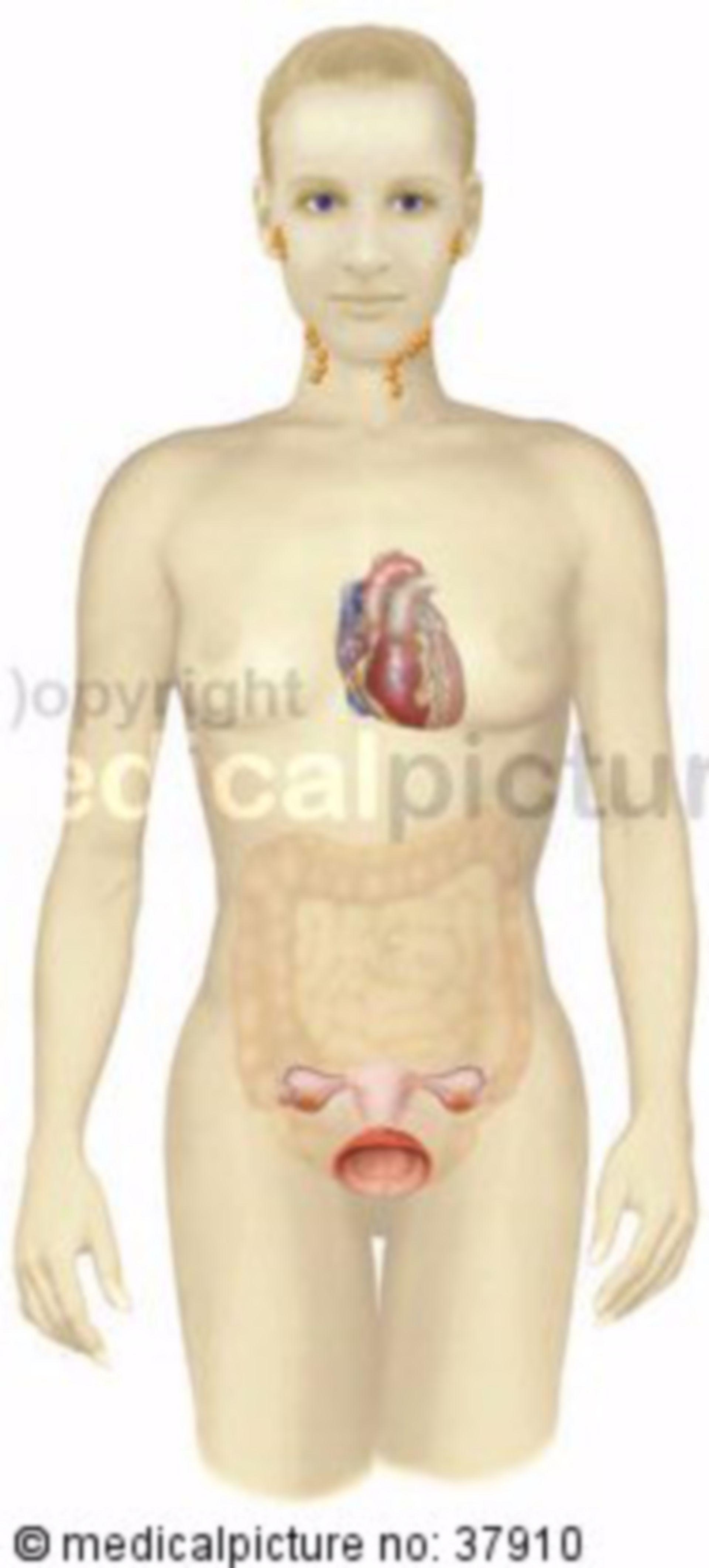 Frau mit verschiedenen Organen