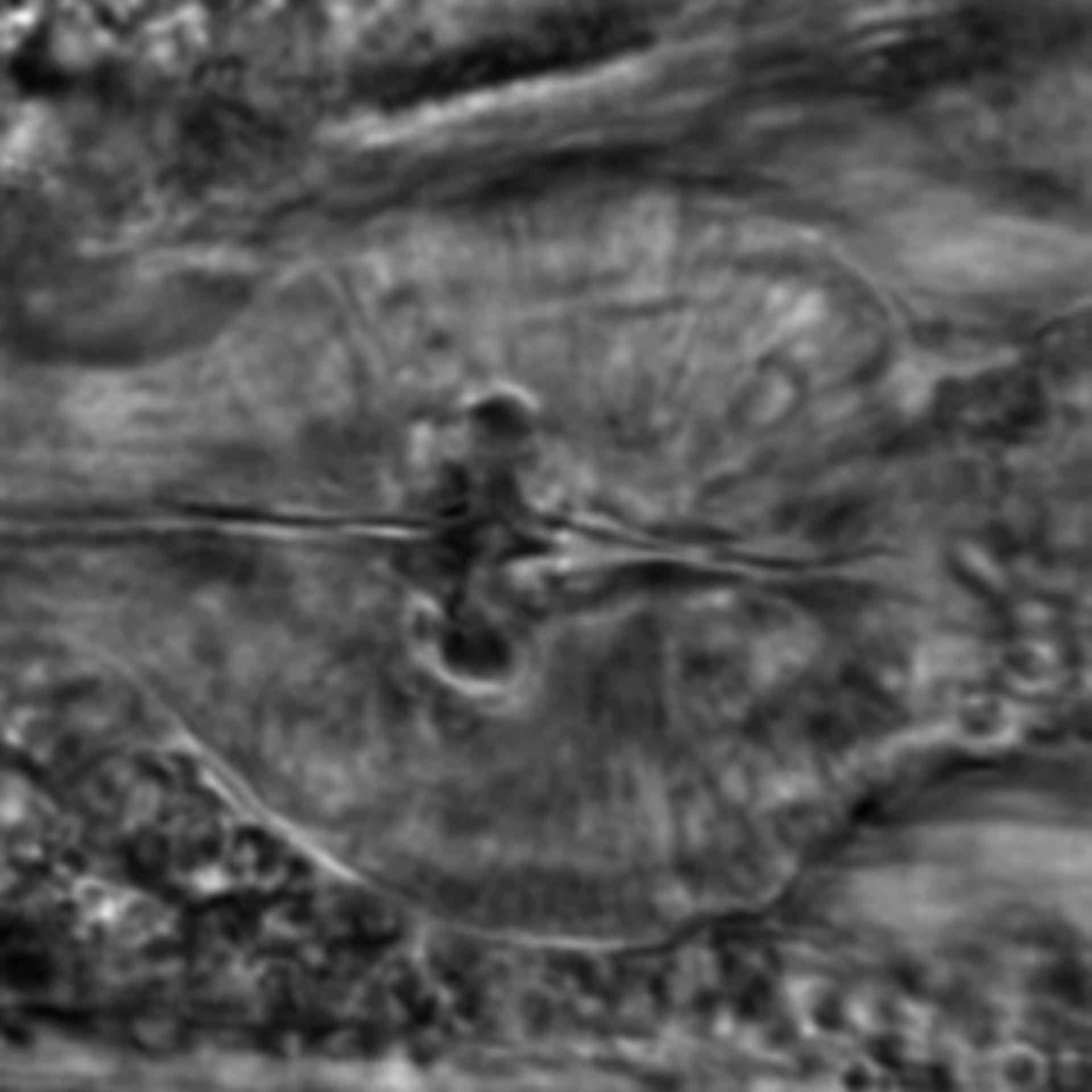 Caenorhabditis elegans - CIL:2237