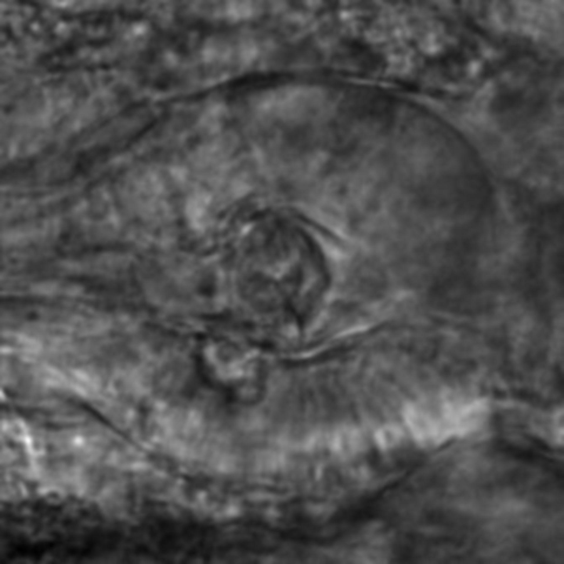 Caenorhabditis elegans - CIL:2846