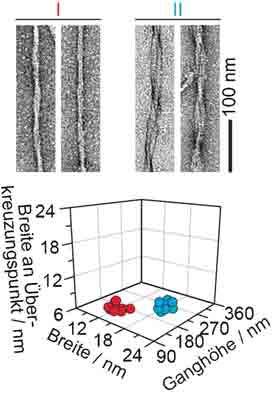 Verschiedene dreidimensionale Architekturen aus Amyloid-Fibrillen. © Wiley-VCH