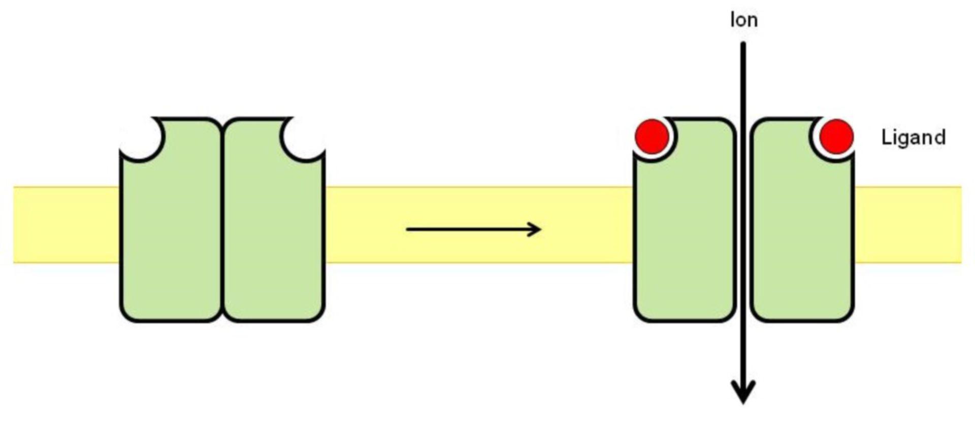 Canal de iones activado por ligandos