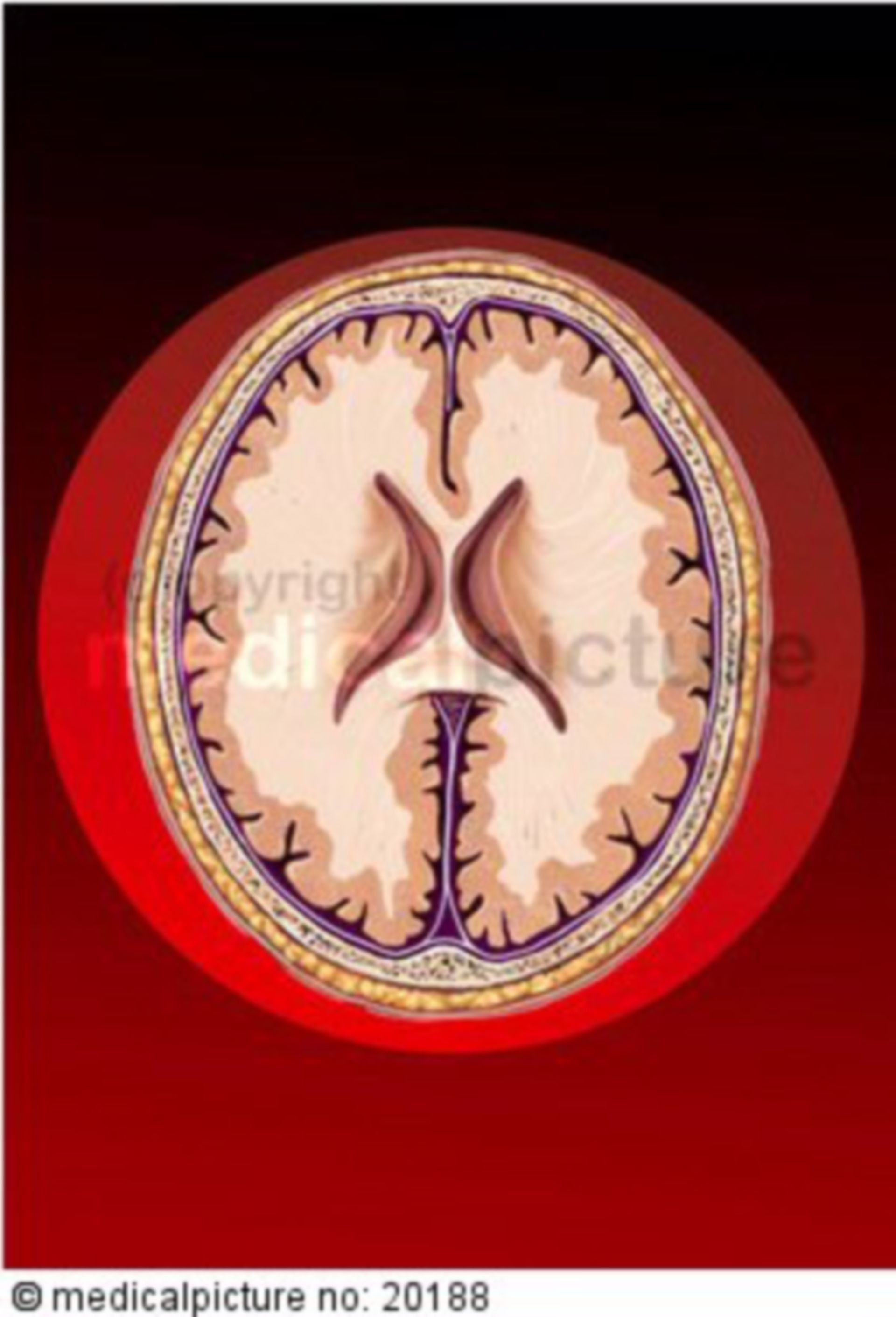 Verschiedene Gehirnschnitte auf rotem Grund