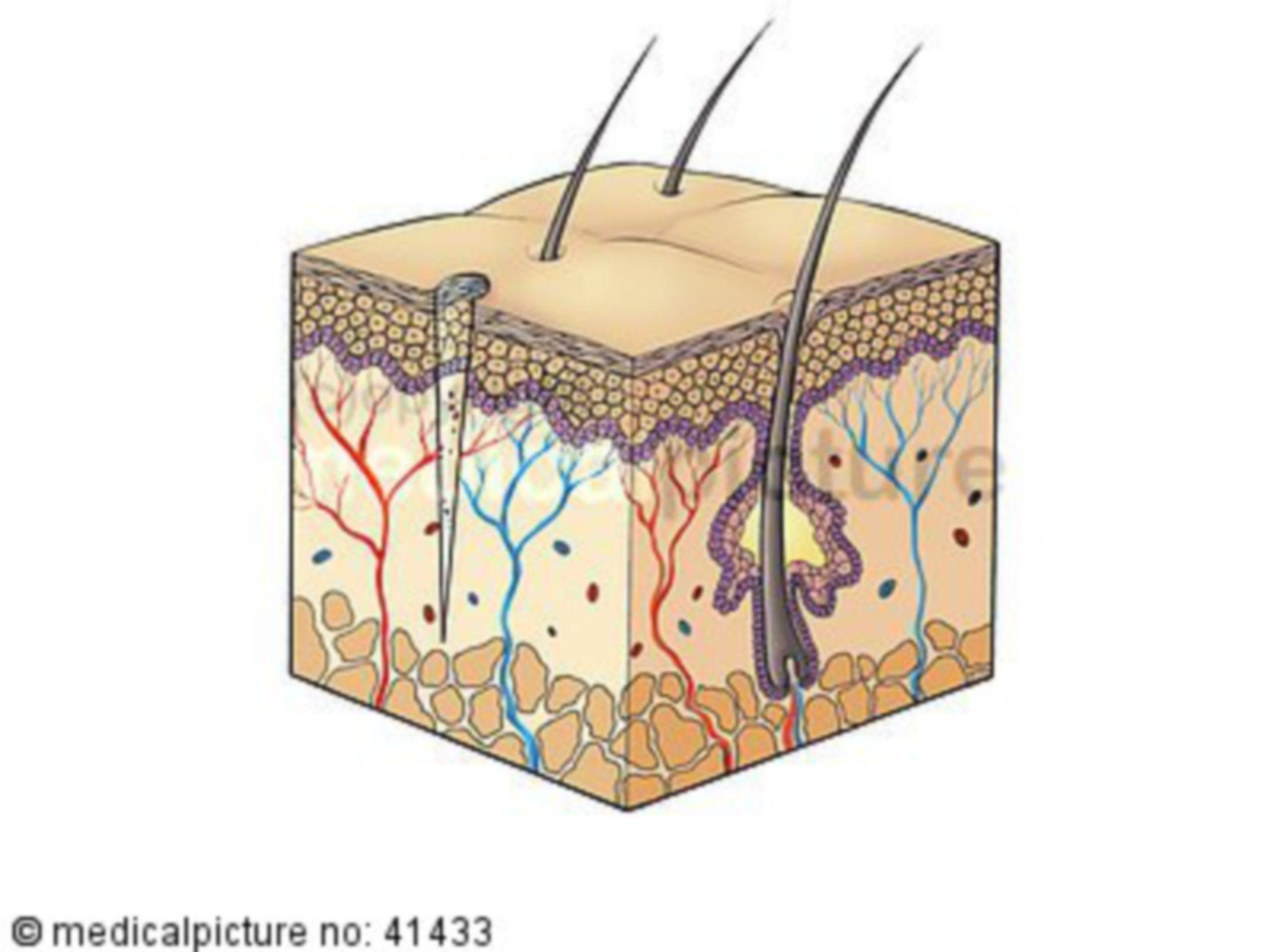 Haut, Stichverletzung, skin, stitch