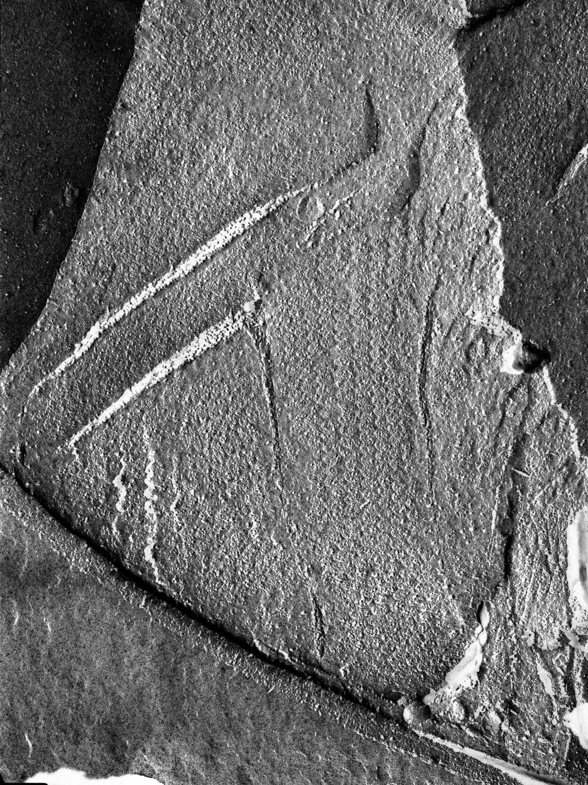 Oscillatoria tenuis (Thylakoid) - CIL:14702