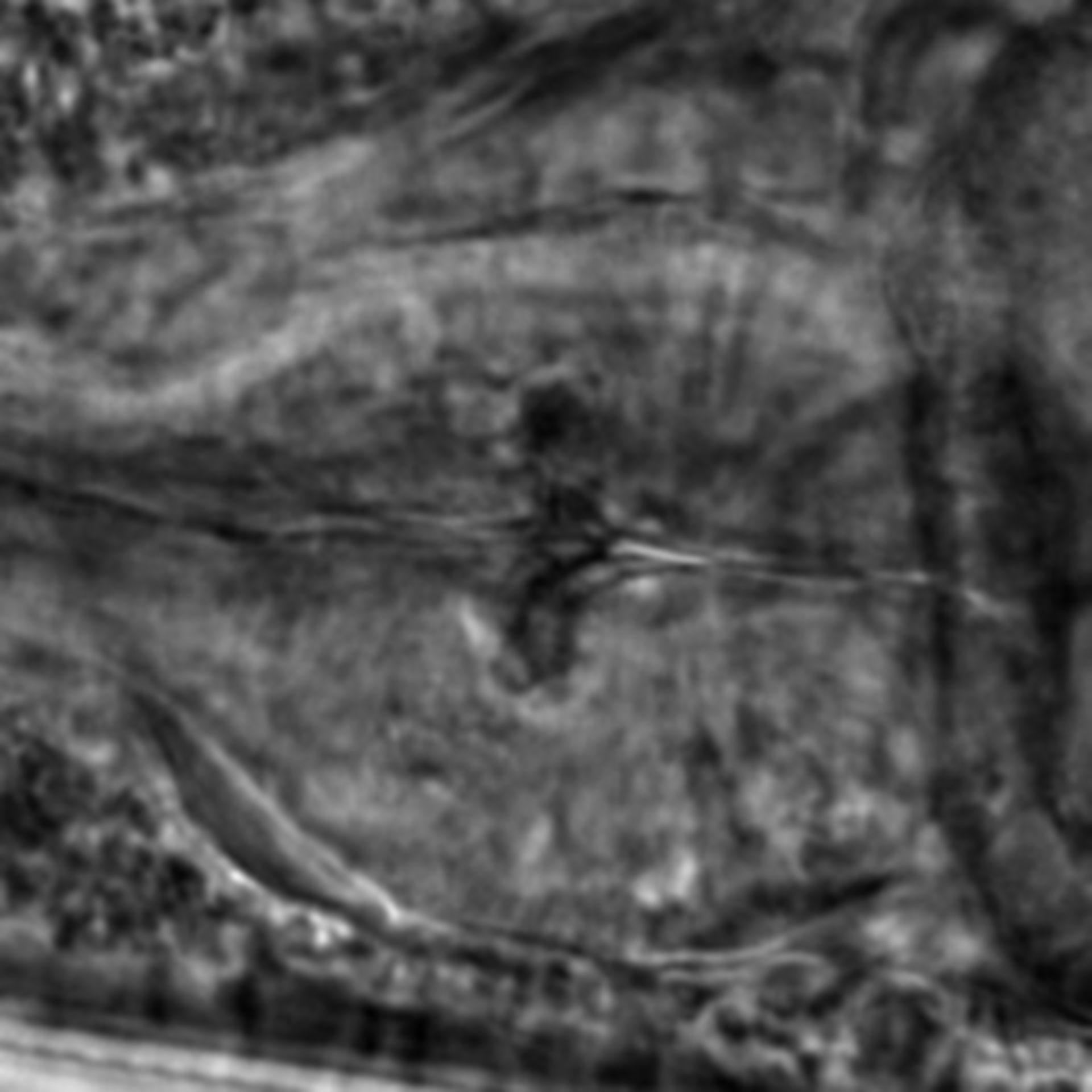 Caenorhabditis elegans - CIL:1992