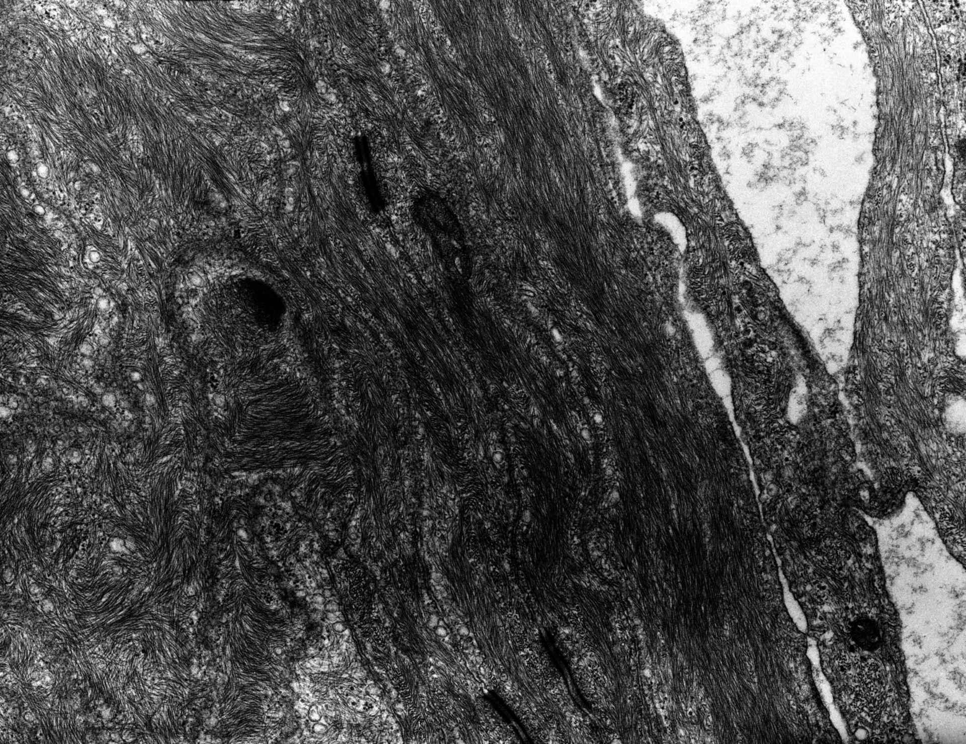 Rana catesbeiana (membrana plasmatica) - CIL:9303