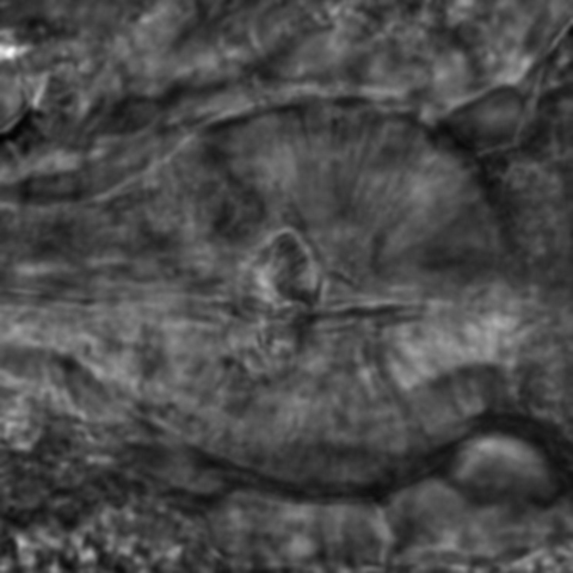 Caenorhabditis elegans - CIL:2203