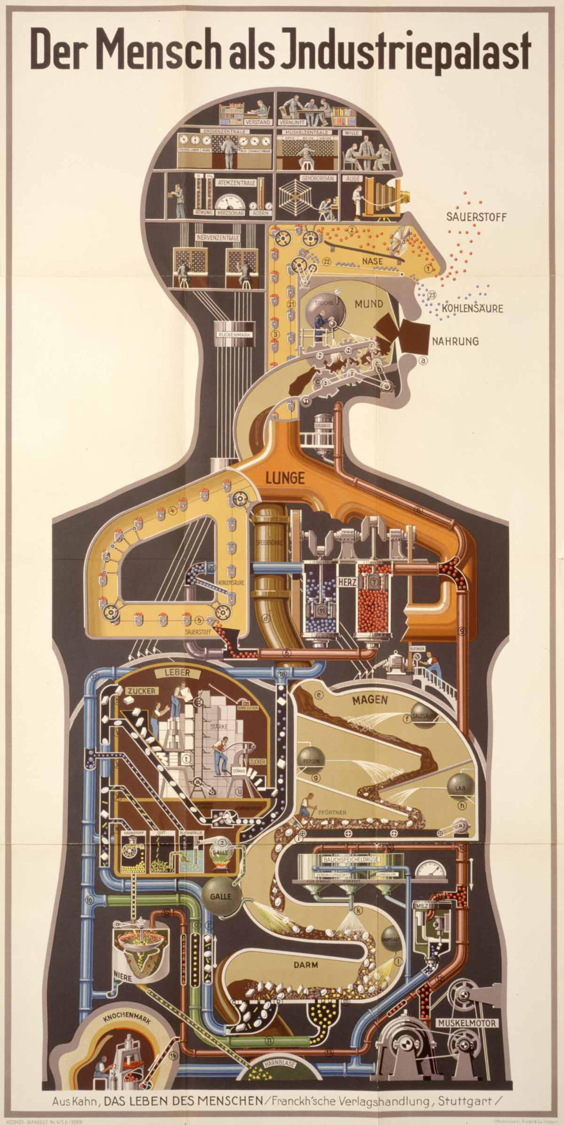 Der Mensch als Industriepalast (Illustration)
