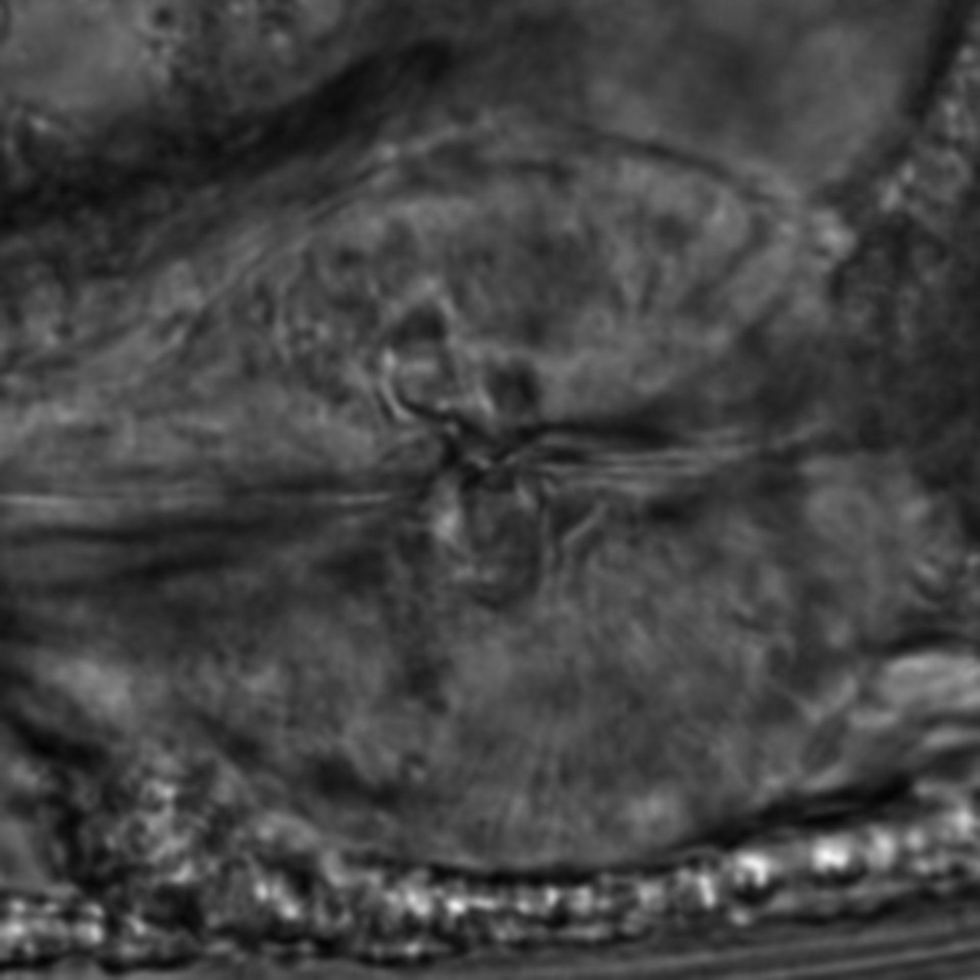 Caenorhabditis elegans - CIL:1905