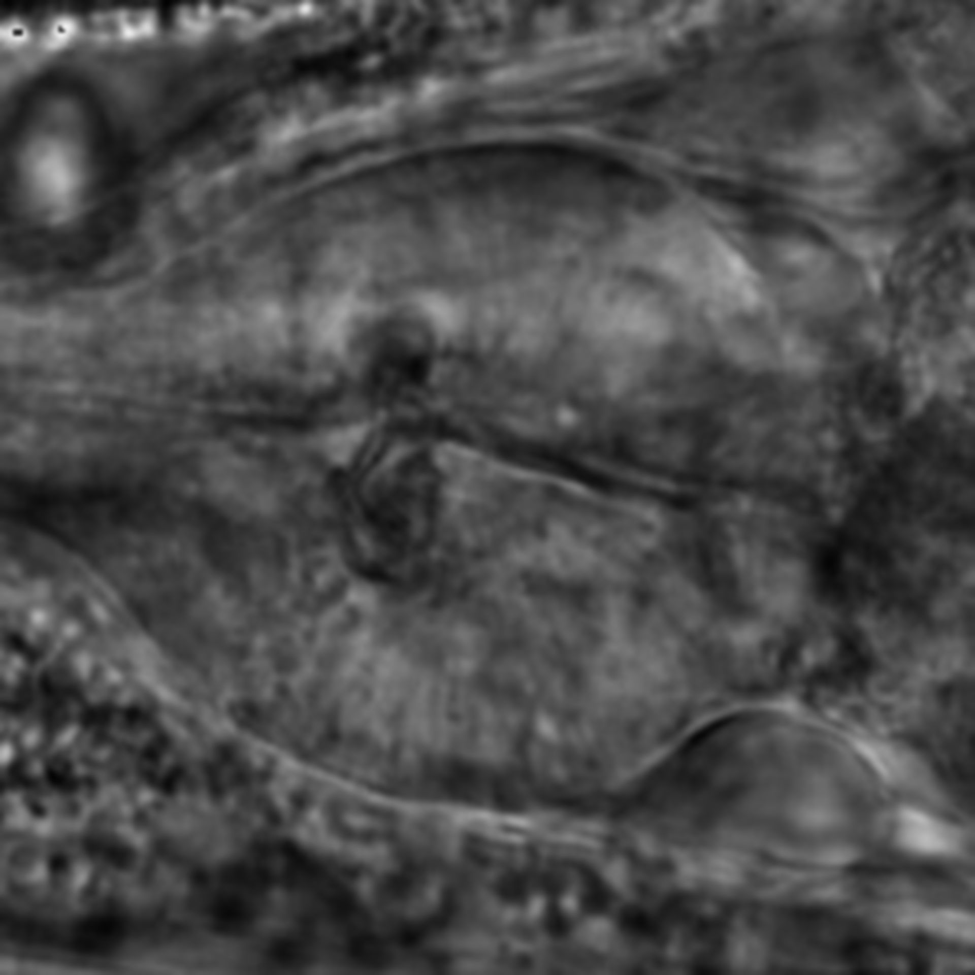 Caenorhabditis elegans - CIL:1928
