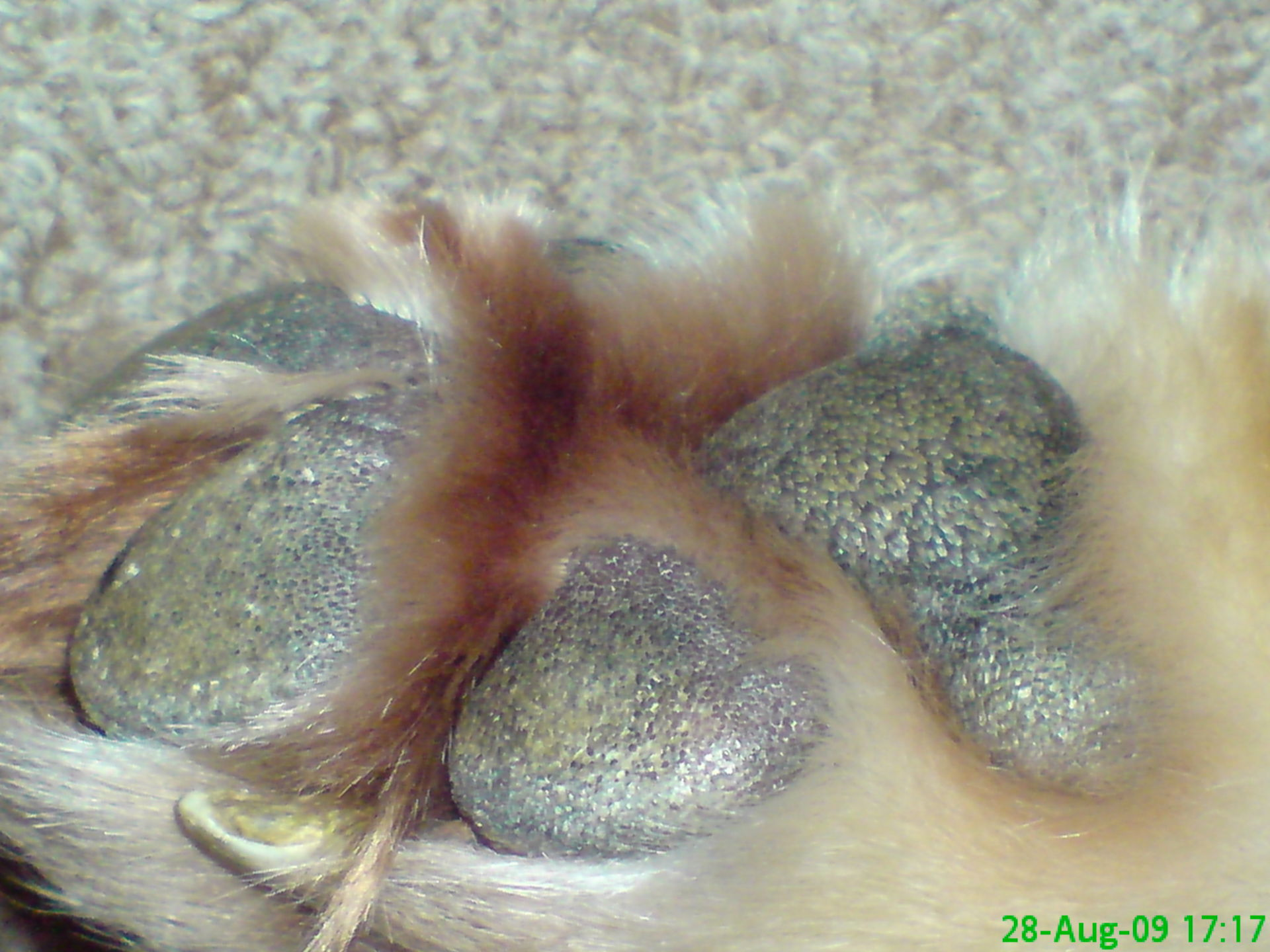 Discoloration of the balls of sole and fur - food allergy