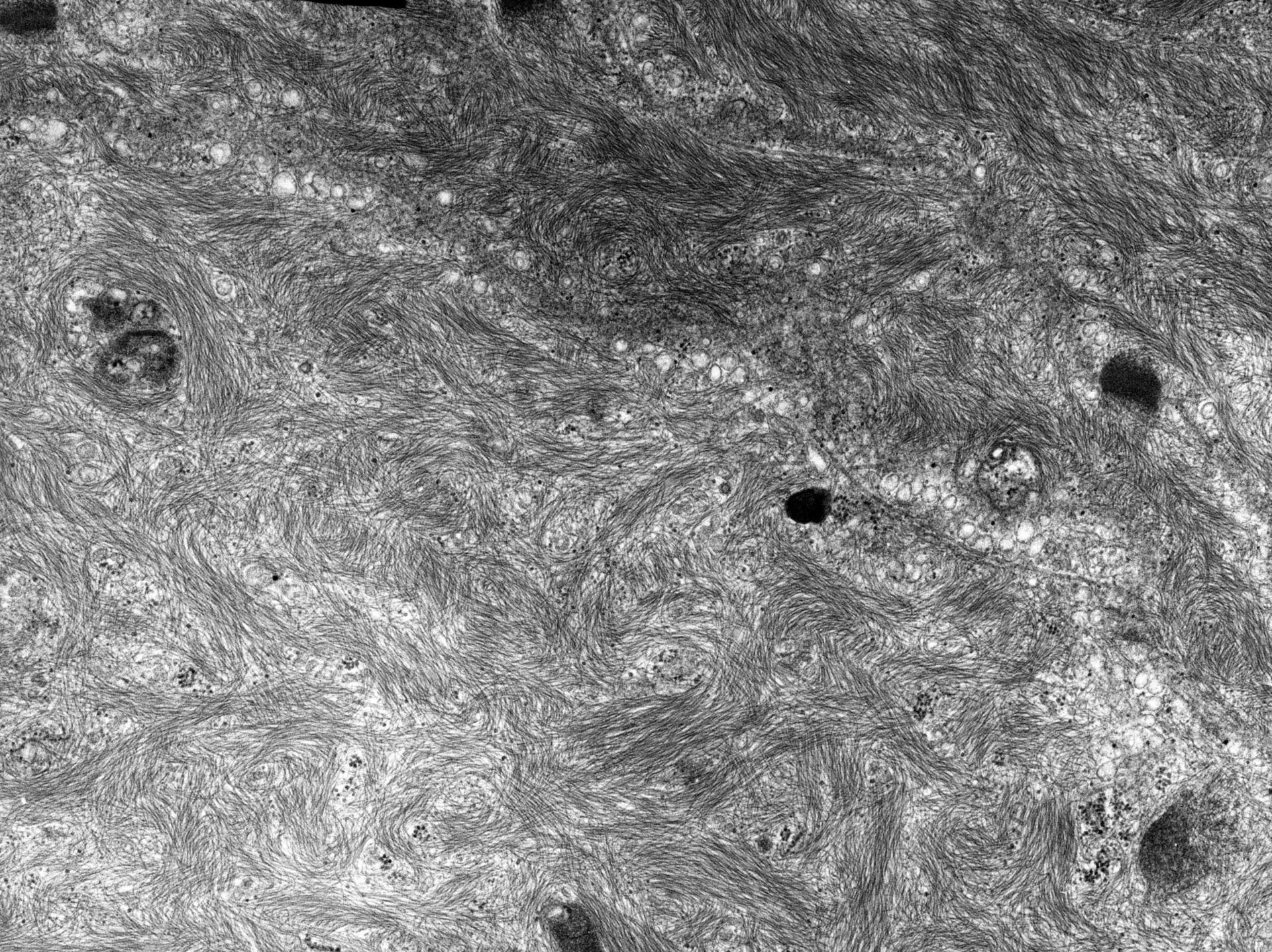 Rana catesbeiana (Plasma membrane) - CIL:10440