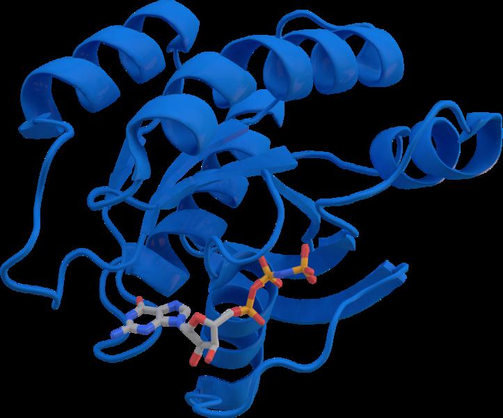 KRAS_protein_3GFT
