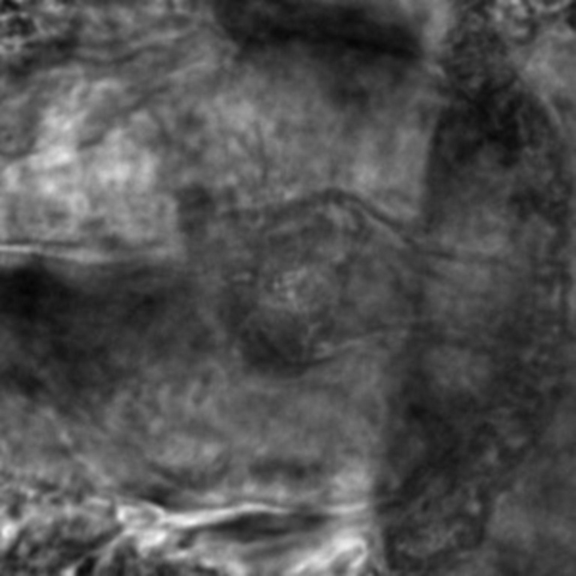 Caenorhabditis elegans - CIL:2830