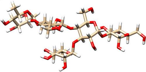"""Süßer Angriffspunkt für therapeutische Antikörper: das Zuckermolekül """"PS-I"""" von C. difficile ist in seiner dreidimensionalen Form dargestellt (orange: Kohlenstoff; rot: Sauerstoff; weiß: Wasserstoff). © MPI f. Kolloid- und Grenzflächenforschung"""