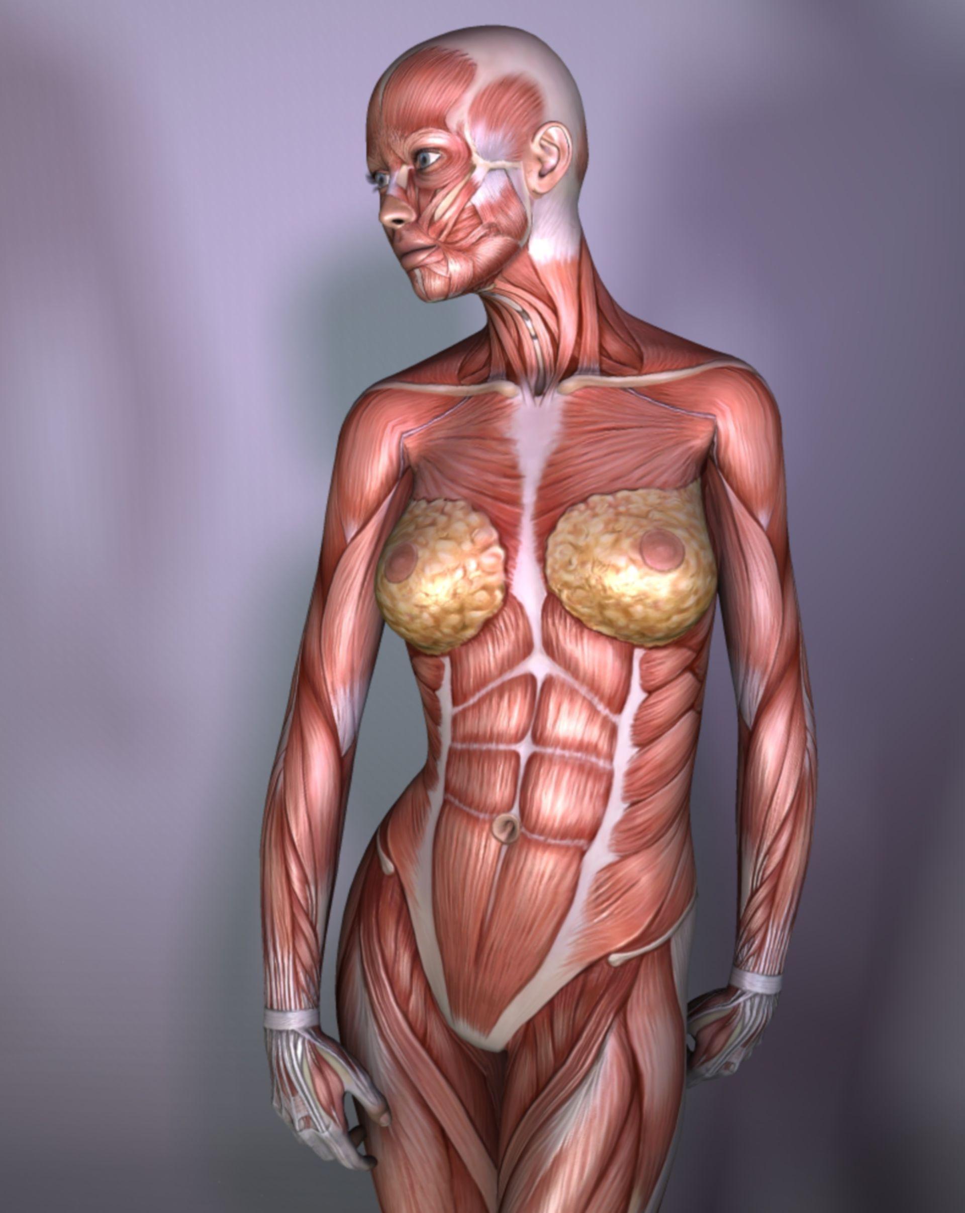 Mujer, músculos