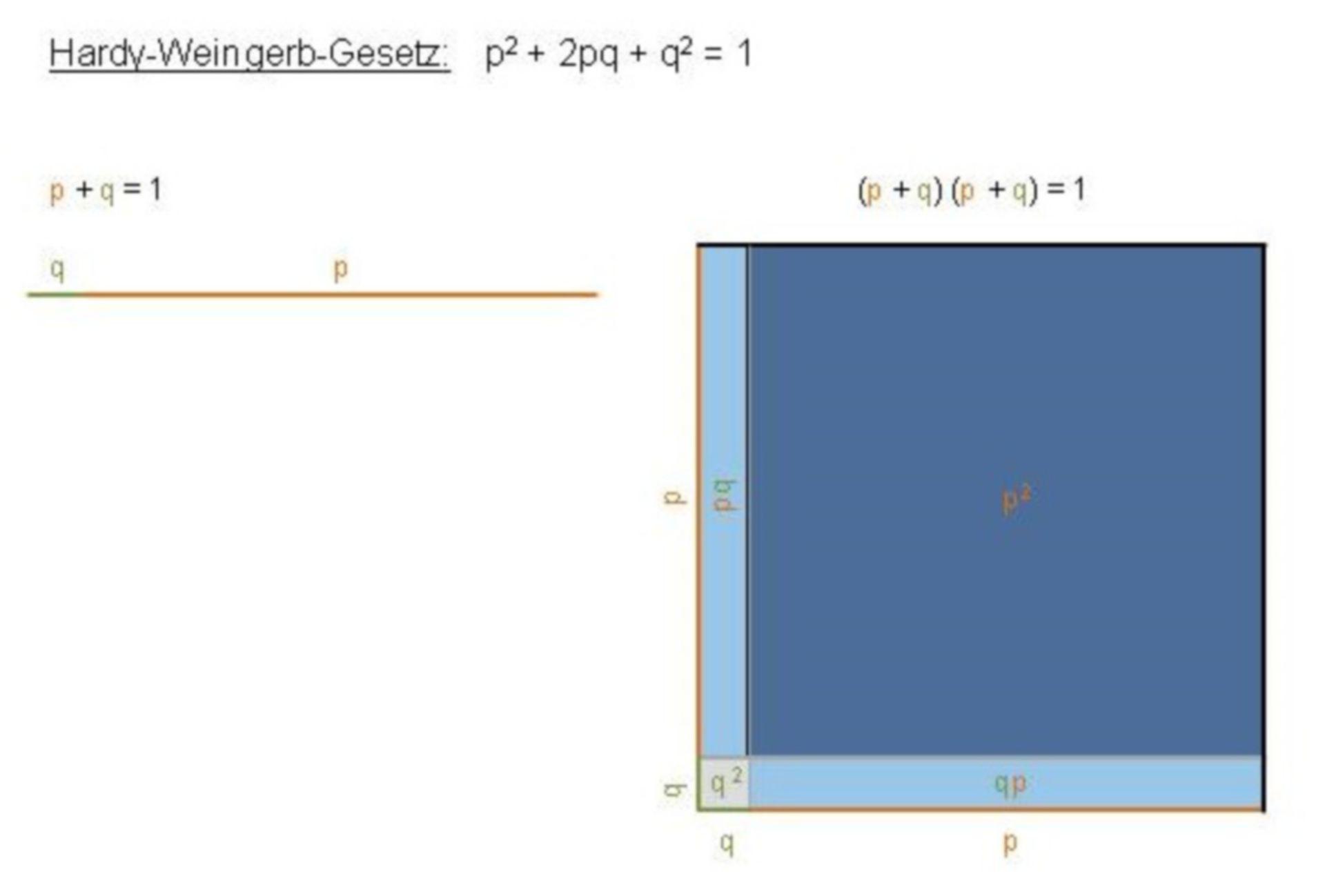 La regla de Hardy-Weinberg