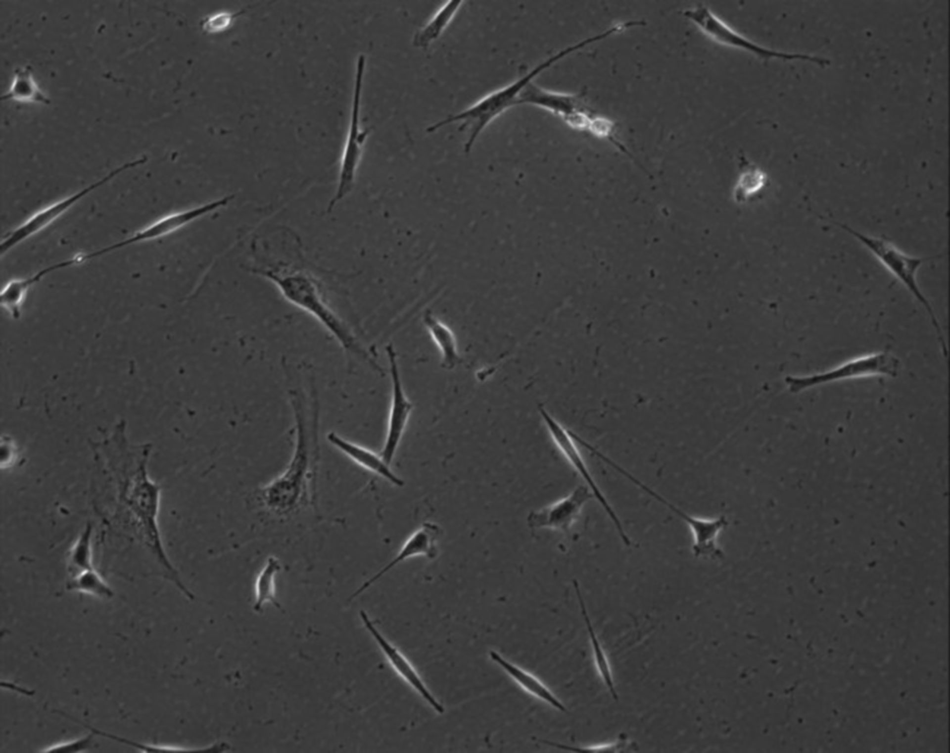 Mus musculus (Extracellular matrix part) - CIL:7840