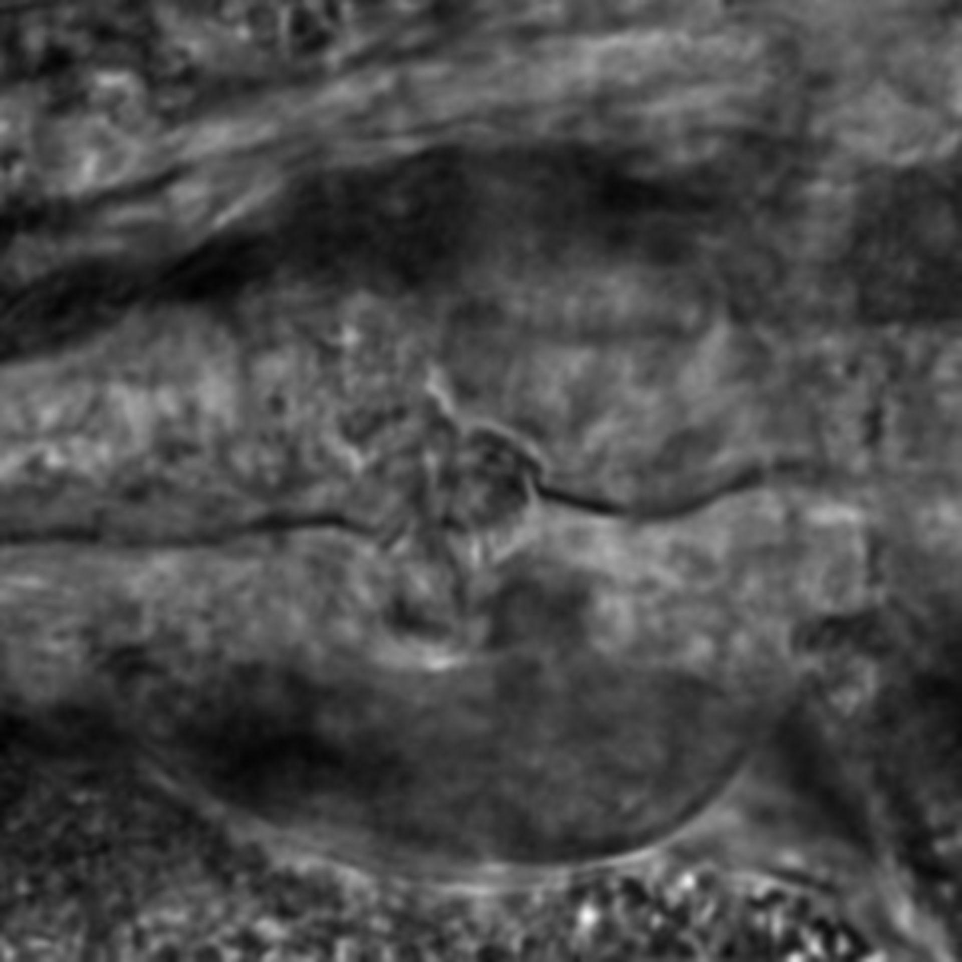 Caenorhabditis elegans - CIL:2292